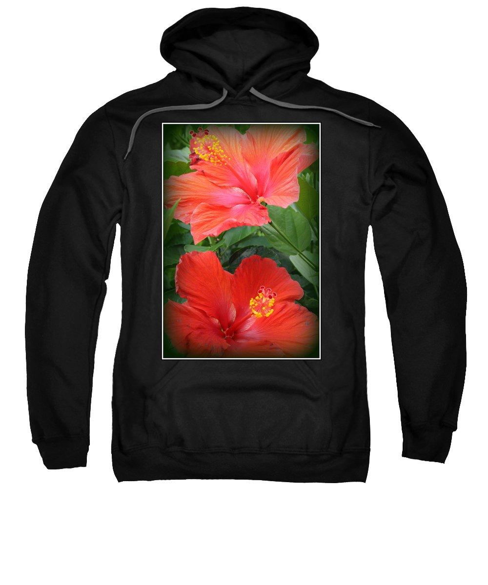 Hibiscus Sweatshirt featuring the photograph Summer Time Beauties - Hibiscus - Dora Sofia Caputo by Dora Sofia Caputo Photographic Design and Fine Art