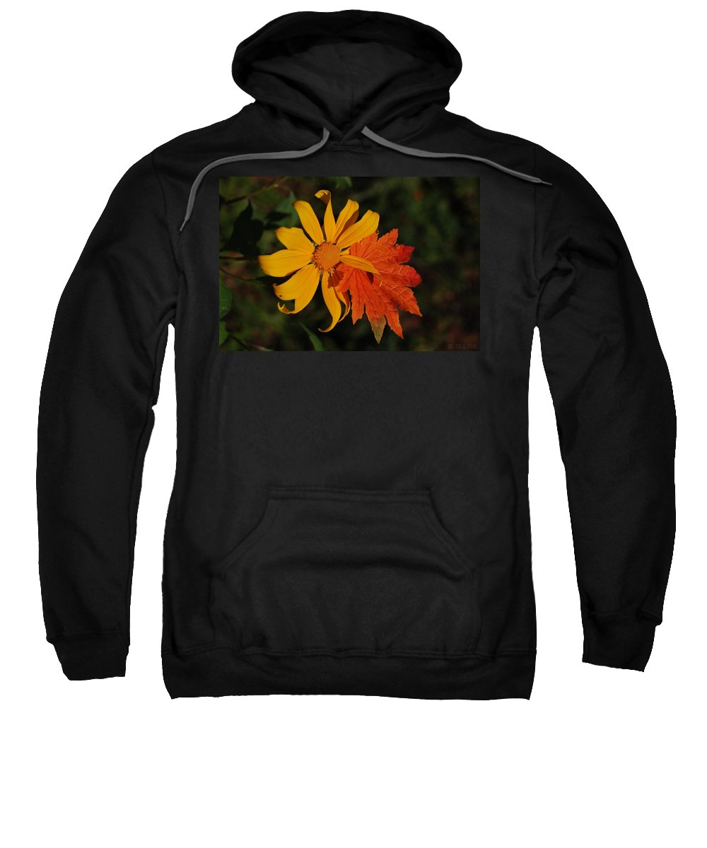 Pop Art Sweatshirt featuring the photograph Sun Flower And Leaf by Rob Hans