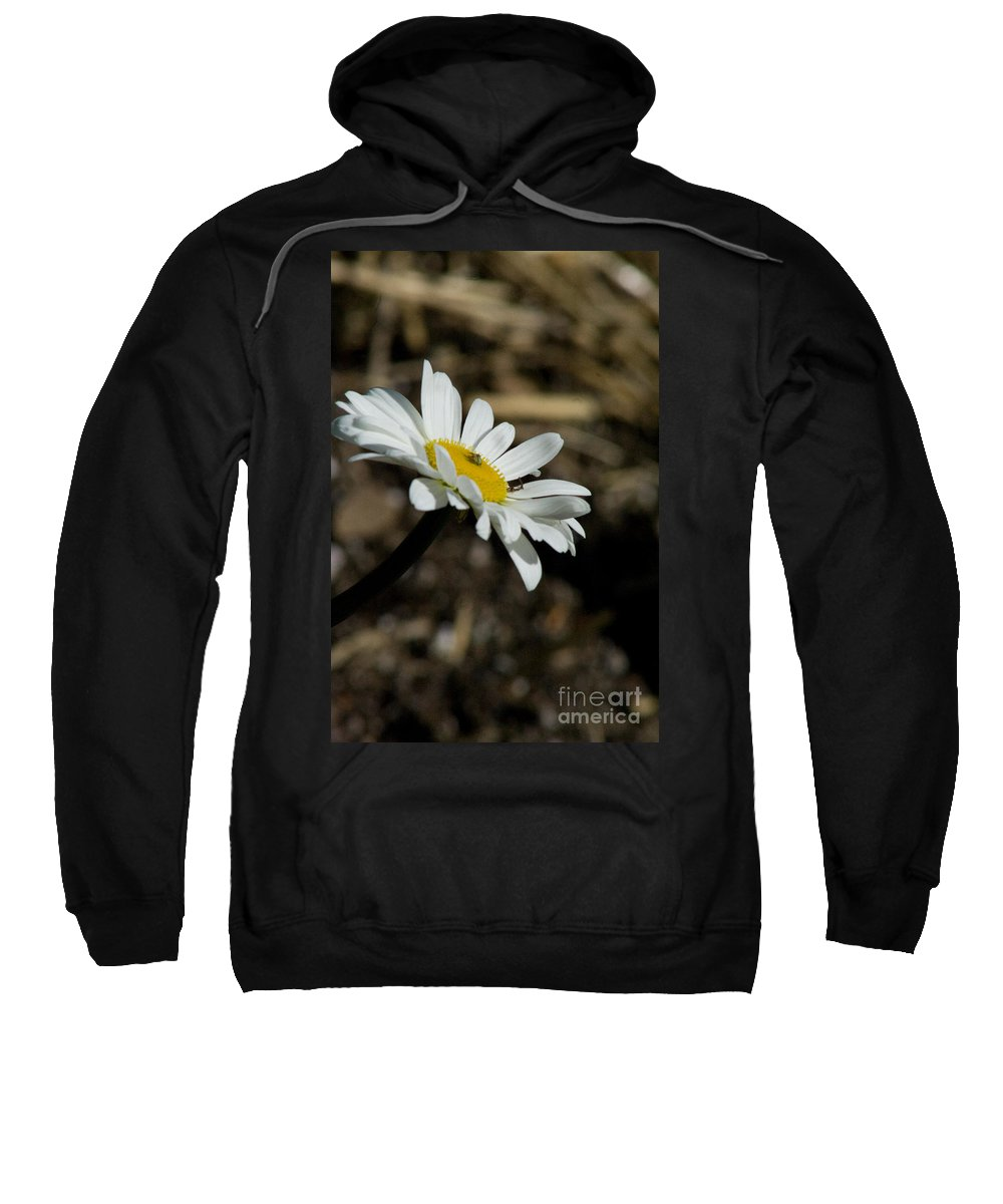Flower Sweatshirt featuring the photograph Sunbathing On A Daisy by Martha Johnson