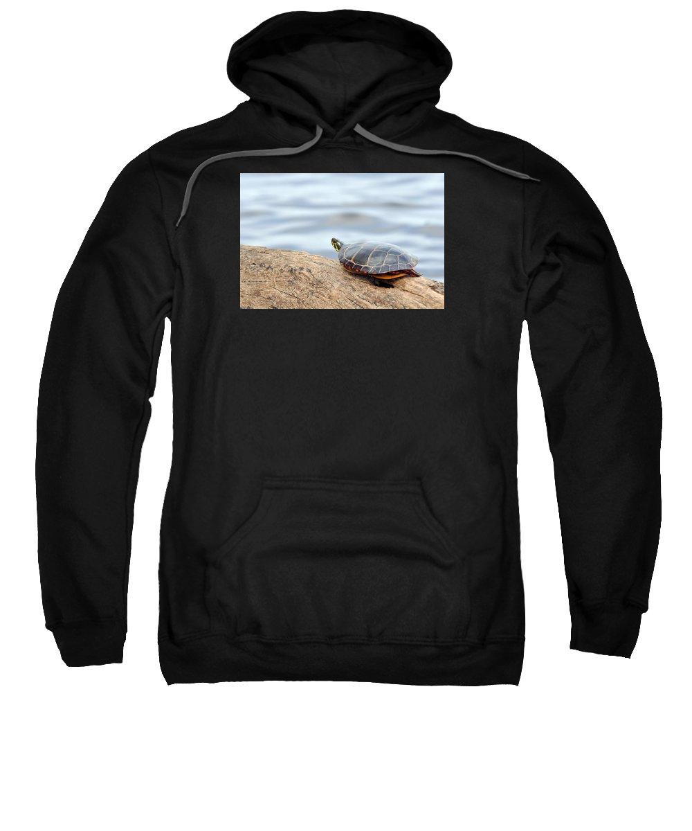 Turtle Sweatshirt featuring the photograph Sunbathing Turtle by Glenn Gordon