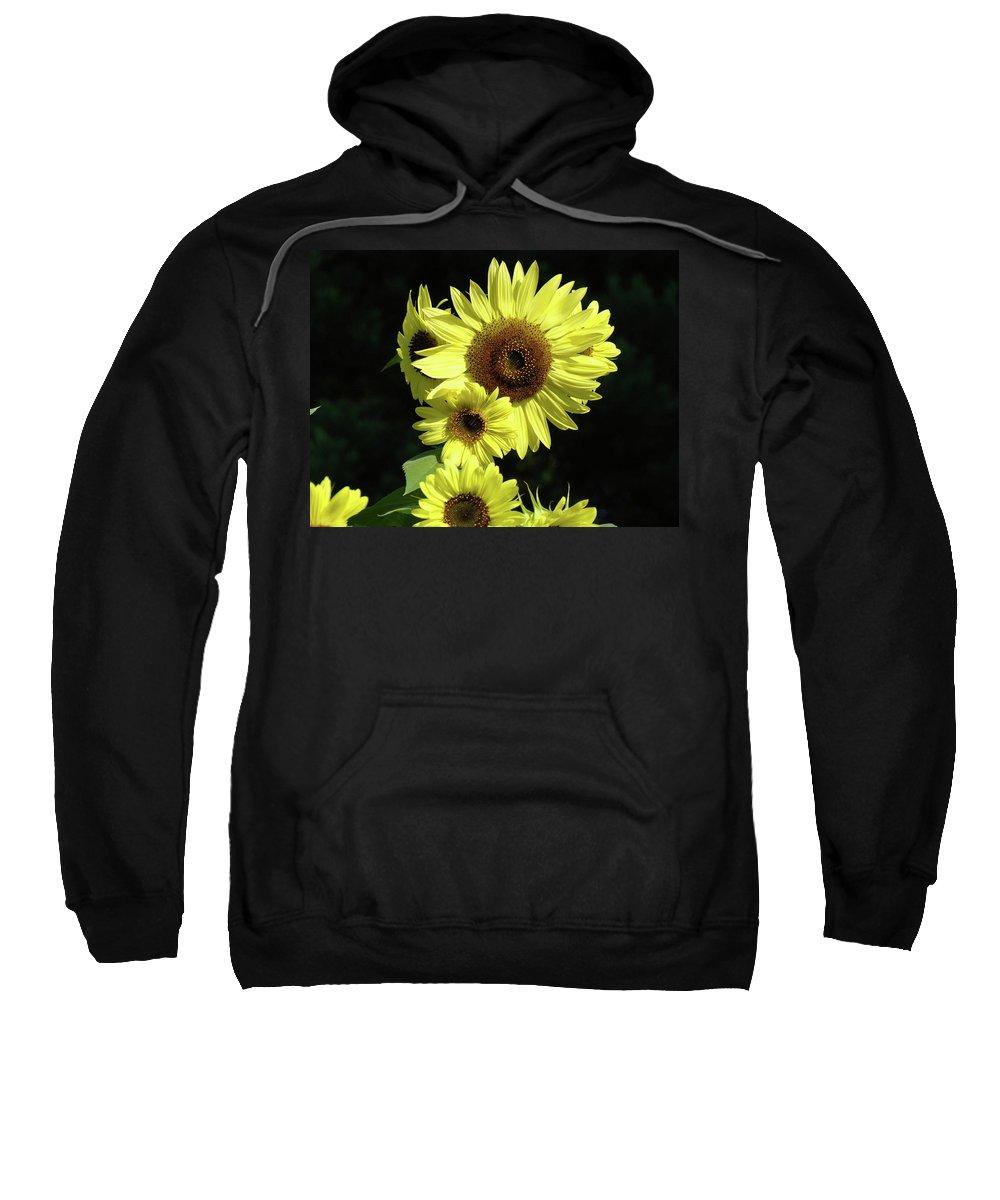 Sunflower Sweatshirt featuring the photograph Sunflowers Art Yellow Sun Flowers Giclee Prints Baslee Troutman by Baslee Troutman