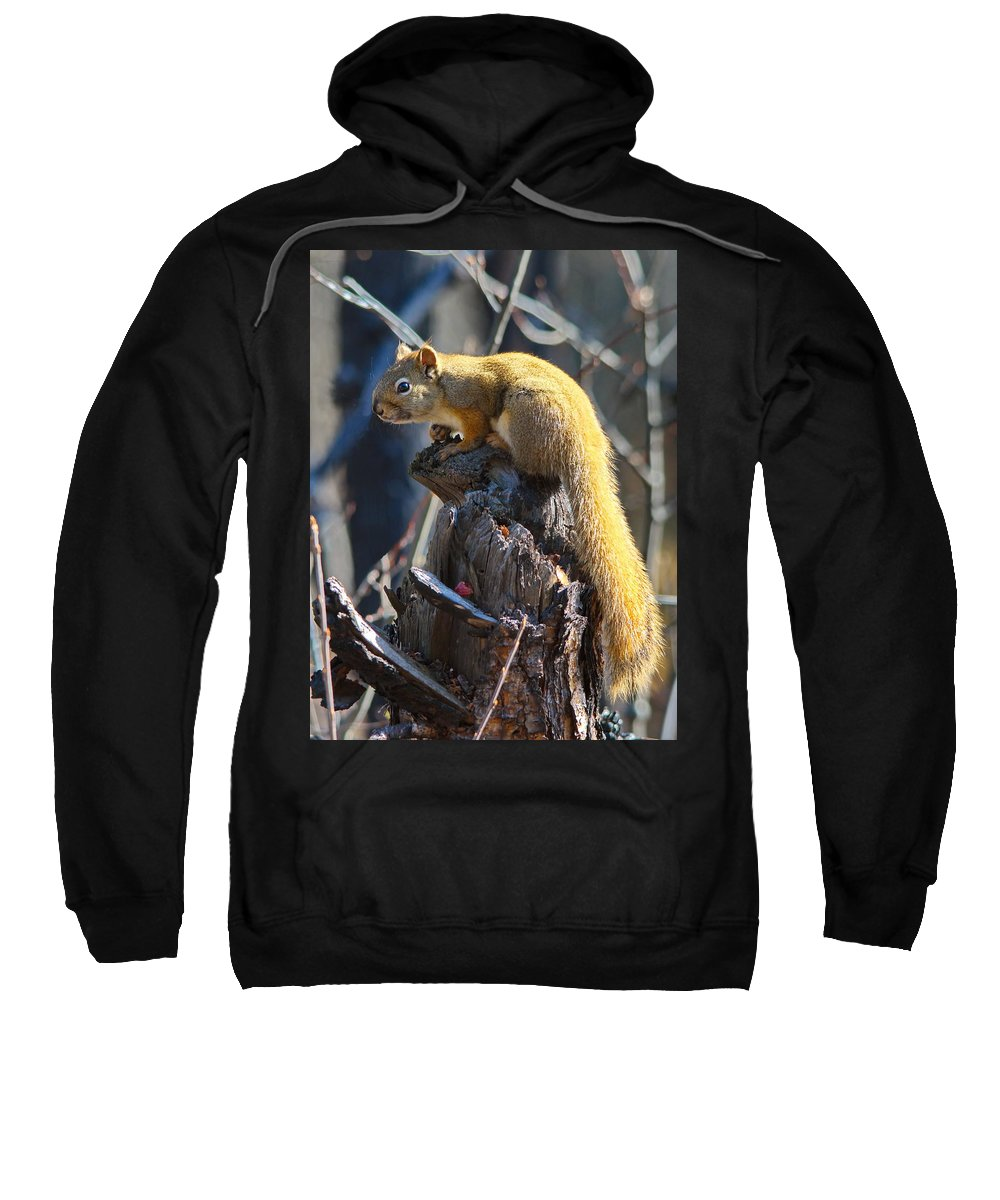 Nature Sweatshirt featuring the photograph Sunning Squirrel by Crystal Massop