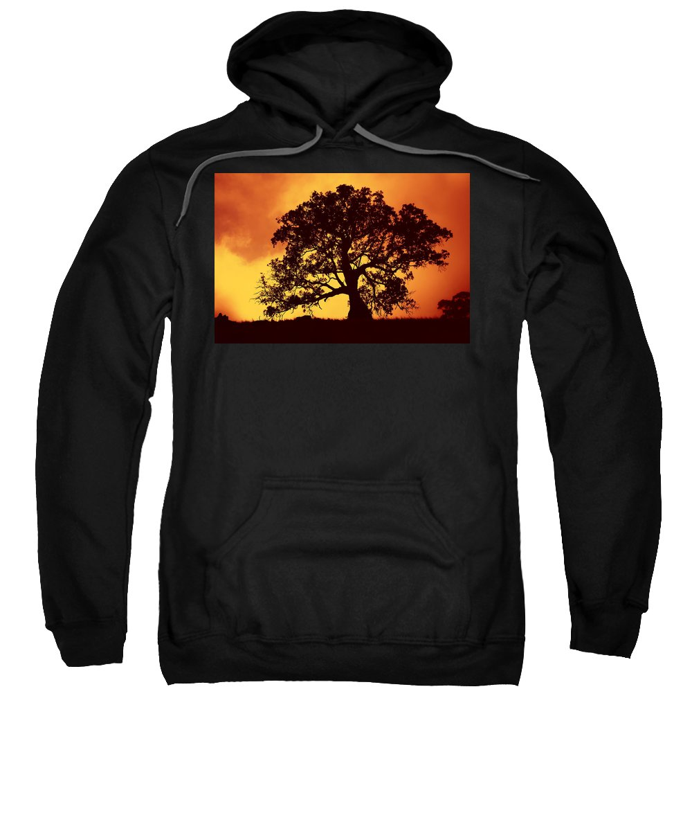 Gum Tree Sweatshirt featuring the photograph Sunrise Gum by Mike Dawson