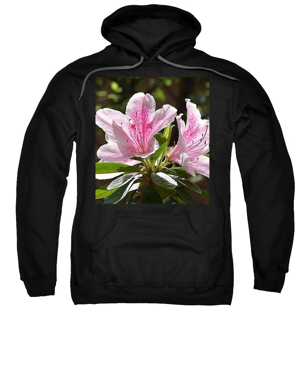 Lily Pinkgreen Pedals Leaves Sweatshirt featuring the photograph Sunshine by Luciana Seymour