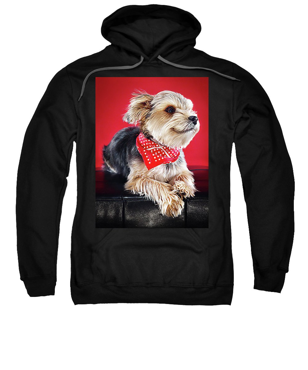 Pets Sweatshirt featuring the photograph Super Pets Series 1 - Super Moose Chilling by Arturo Parada