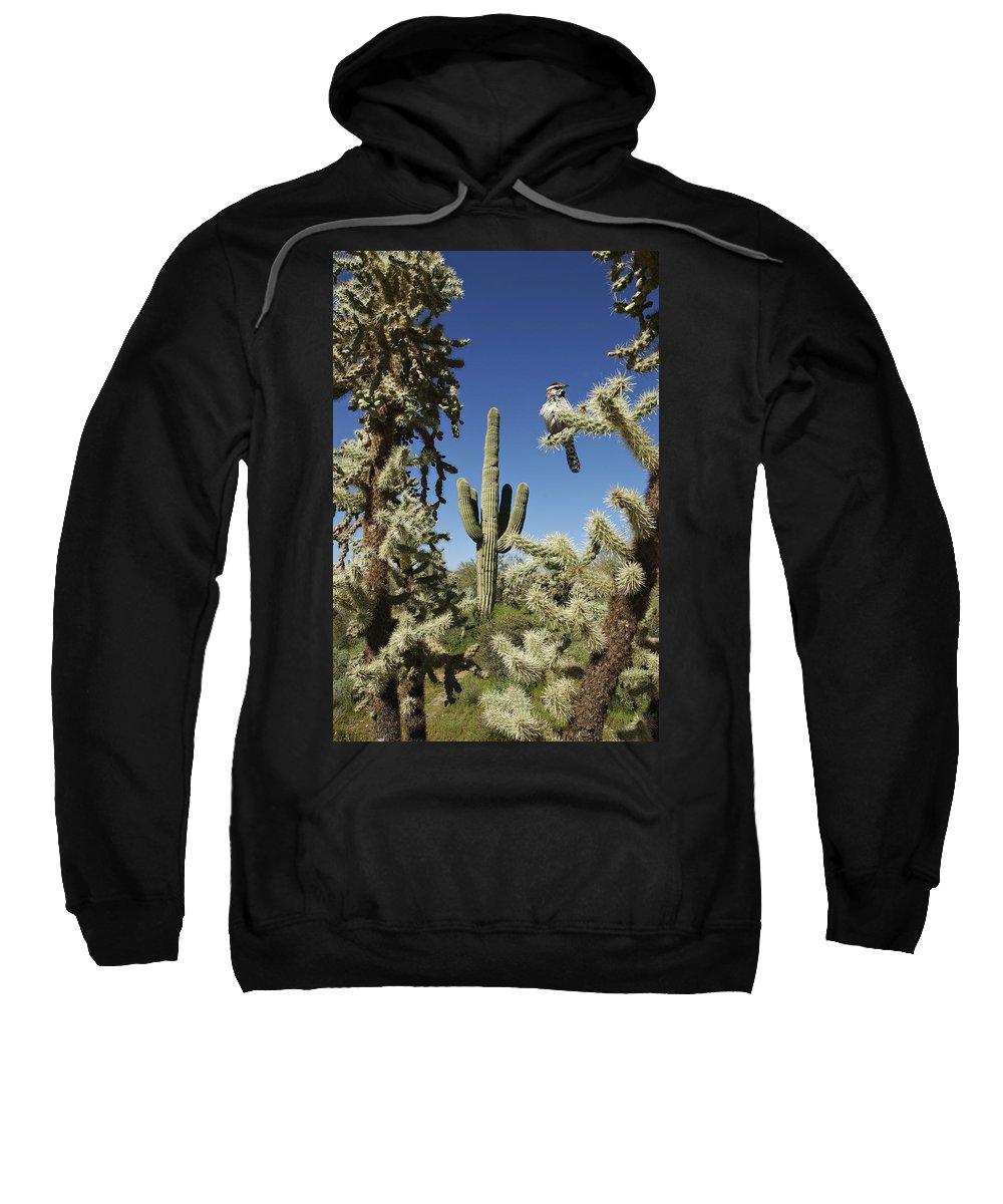 Saguaro Sweatshirt featuring the photograph Surrounded Saguaro Cactus Wren by Jill Reger