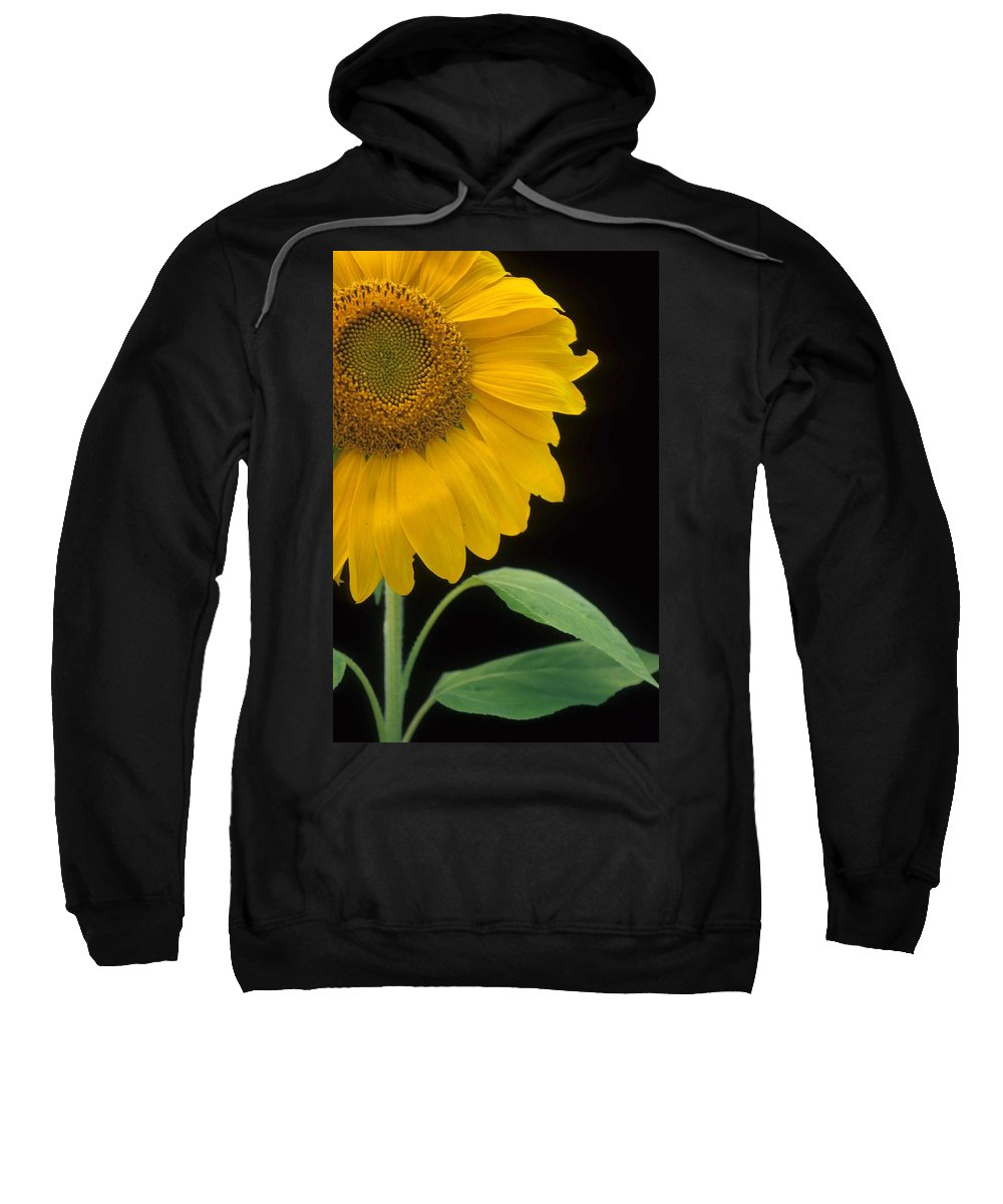 Sunflower Sweatshirt featuring the photograph Sussex County Gem by Laurie Paci