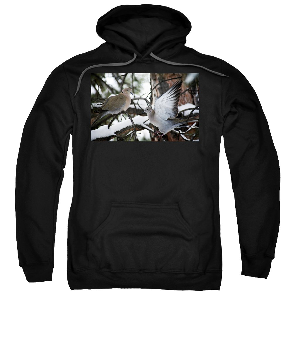 Dove Sweatshirt featuring the photograph Sweetness In The Trees by Marilyn Hunt