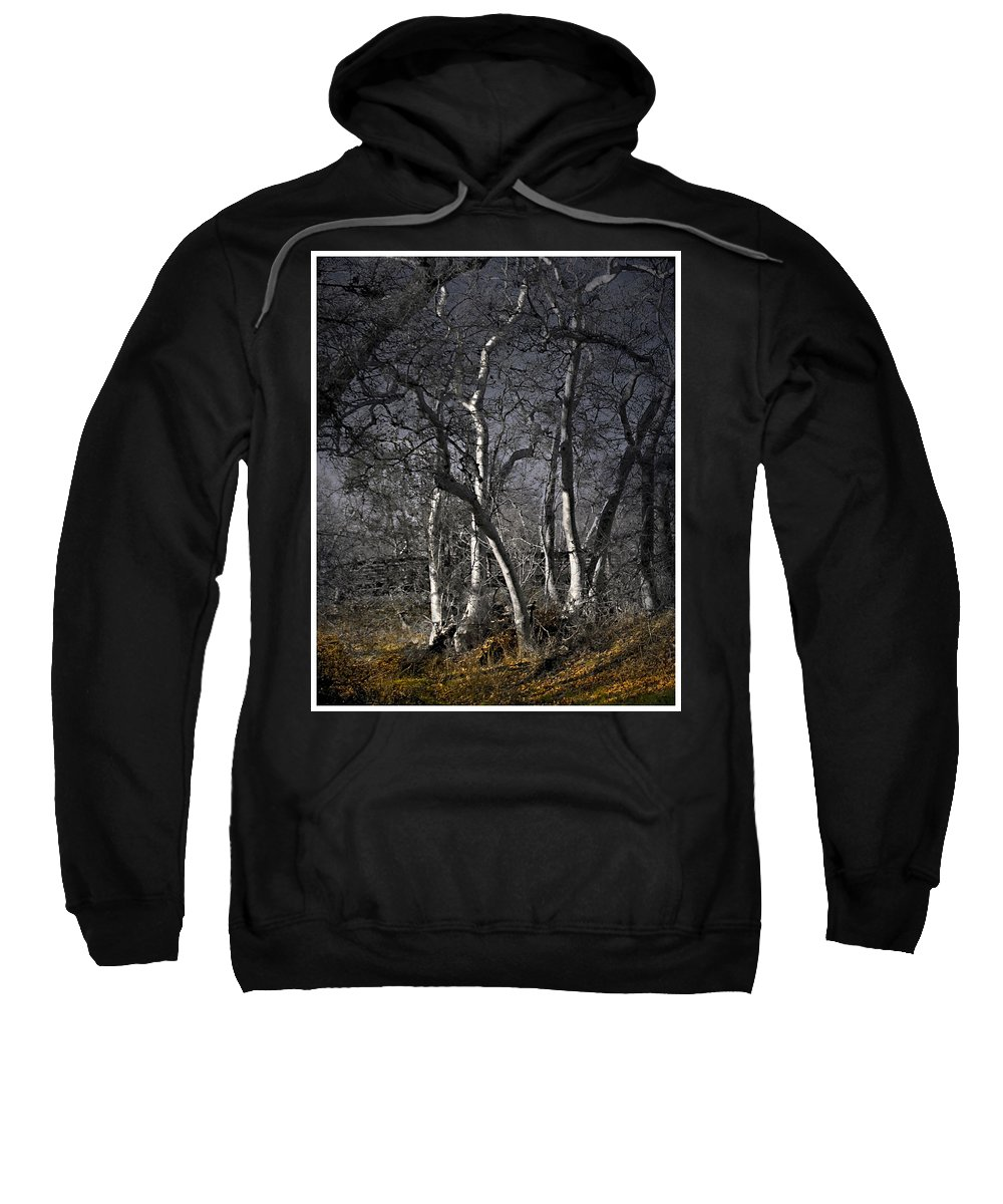 Landscape Sweatshirt featuring the photograph Sycamore Grove by Karen W Meyer