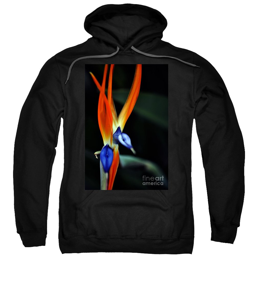 Clay Sweatshirt featuring the photograph Taking Aim by Clayton Bruster
