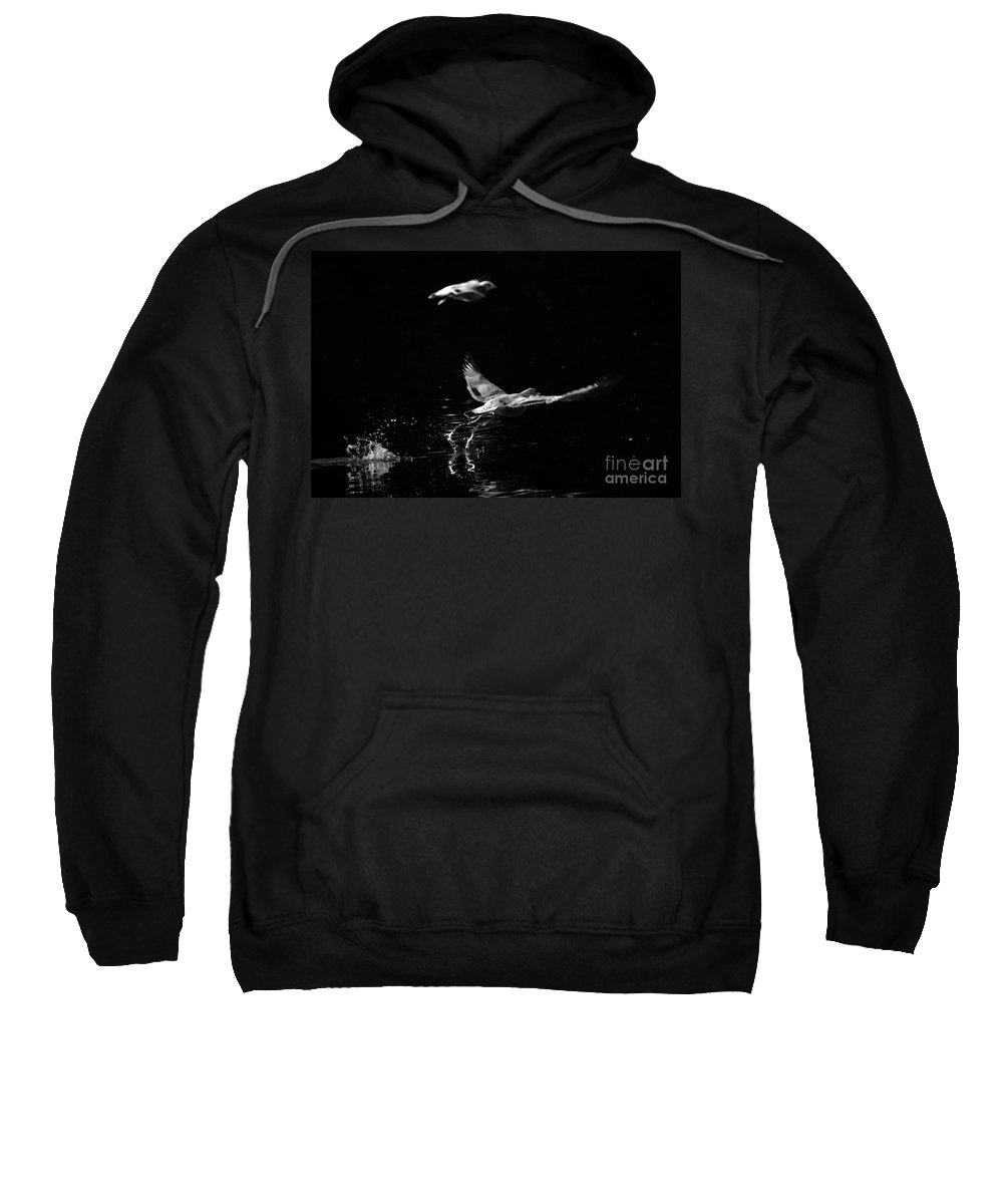 Seagull Sweatshirt featuring the photograph Taking Off by Karol Livote