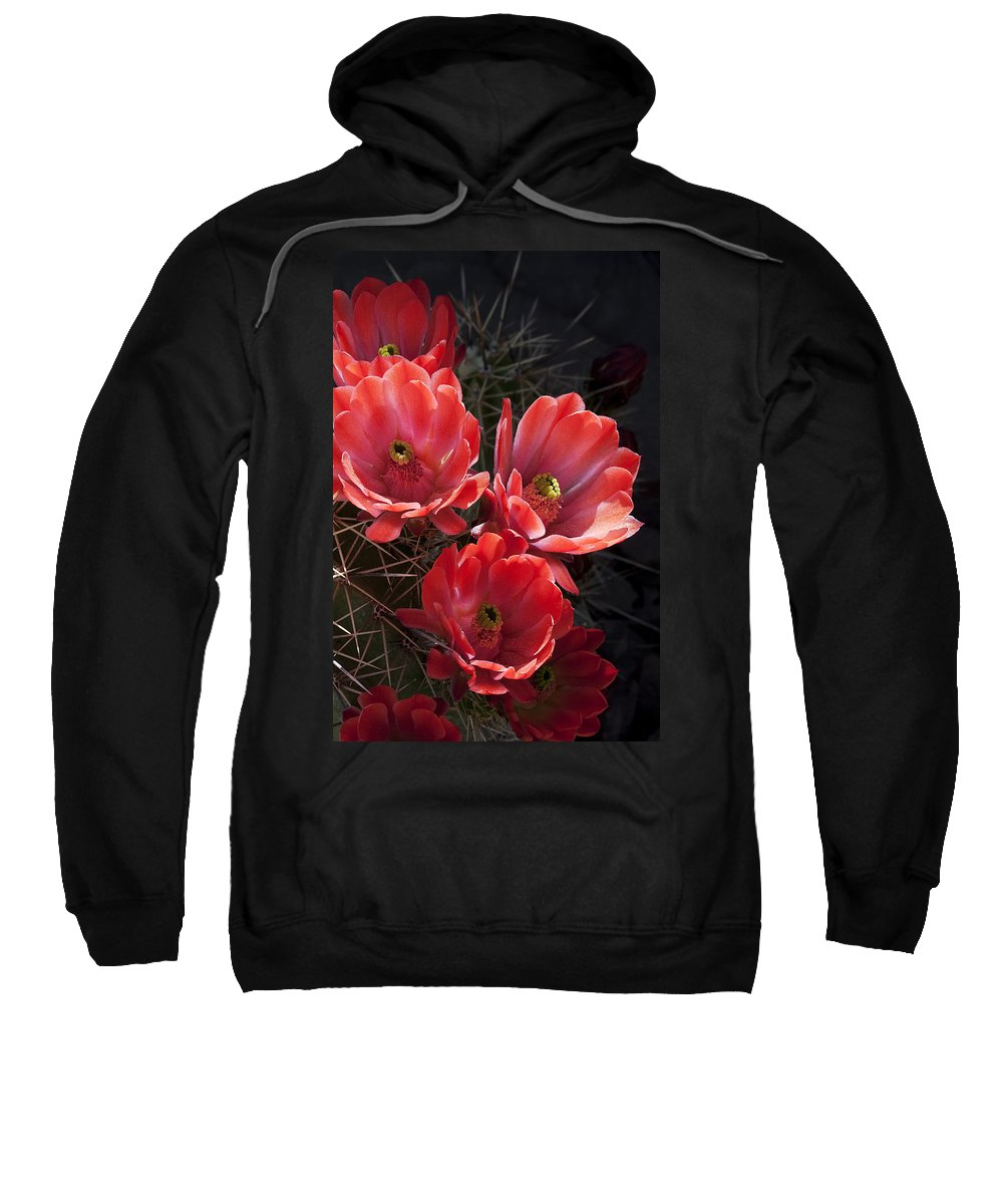 Blossoms Sweatshirt featuring the photograph Tangerine Cactus Flower by Phyllis Denton