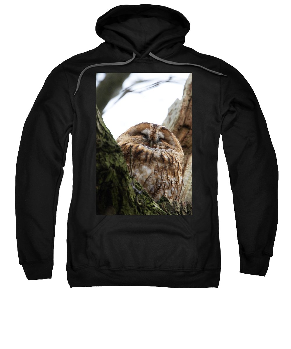 Tawny Owl Sweatshirt featuring the photograph Tawny Owl by Bob Kemp