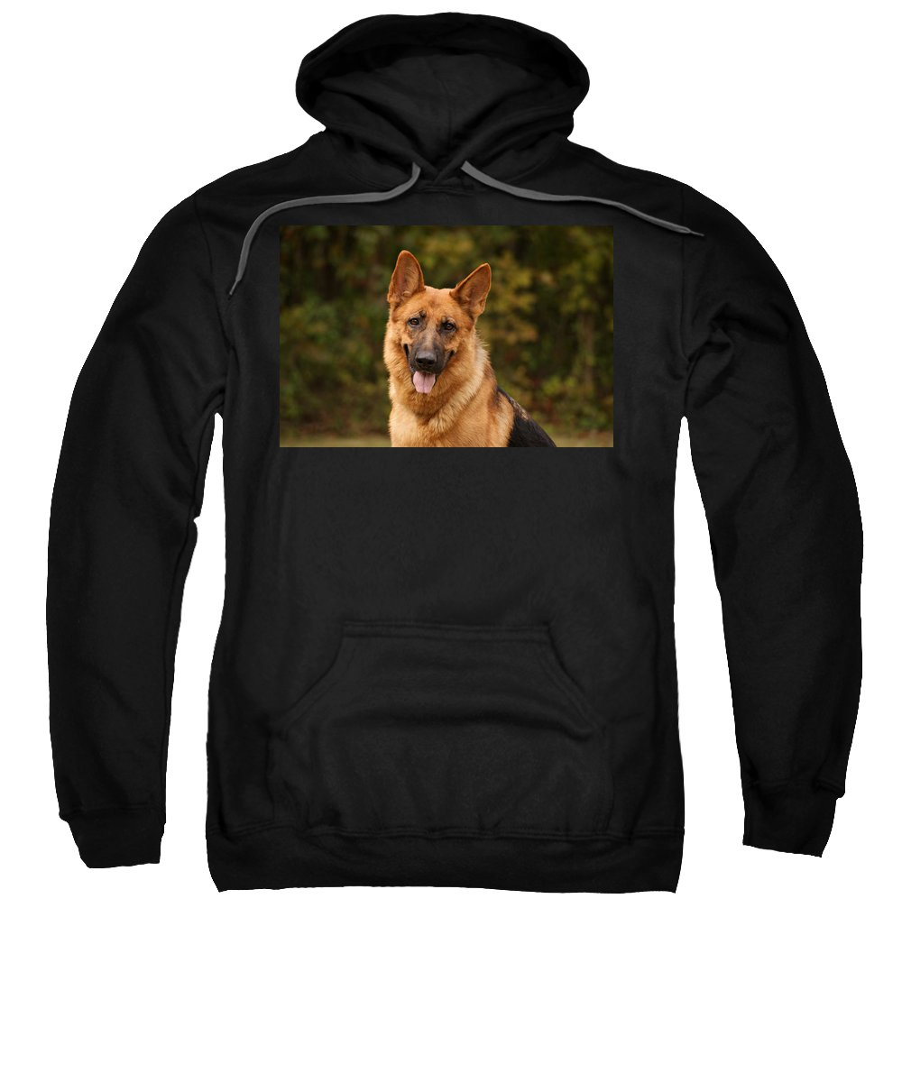 German Shepherd Dog Sweatshirt featuring the photograph The Beautiful Kelly by Sandy Keeton
