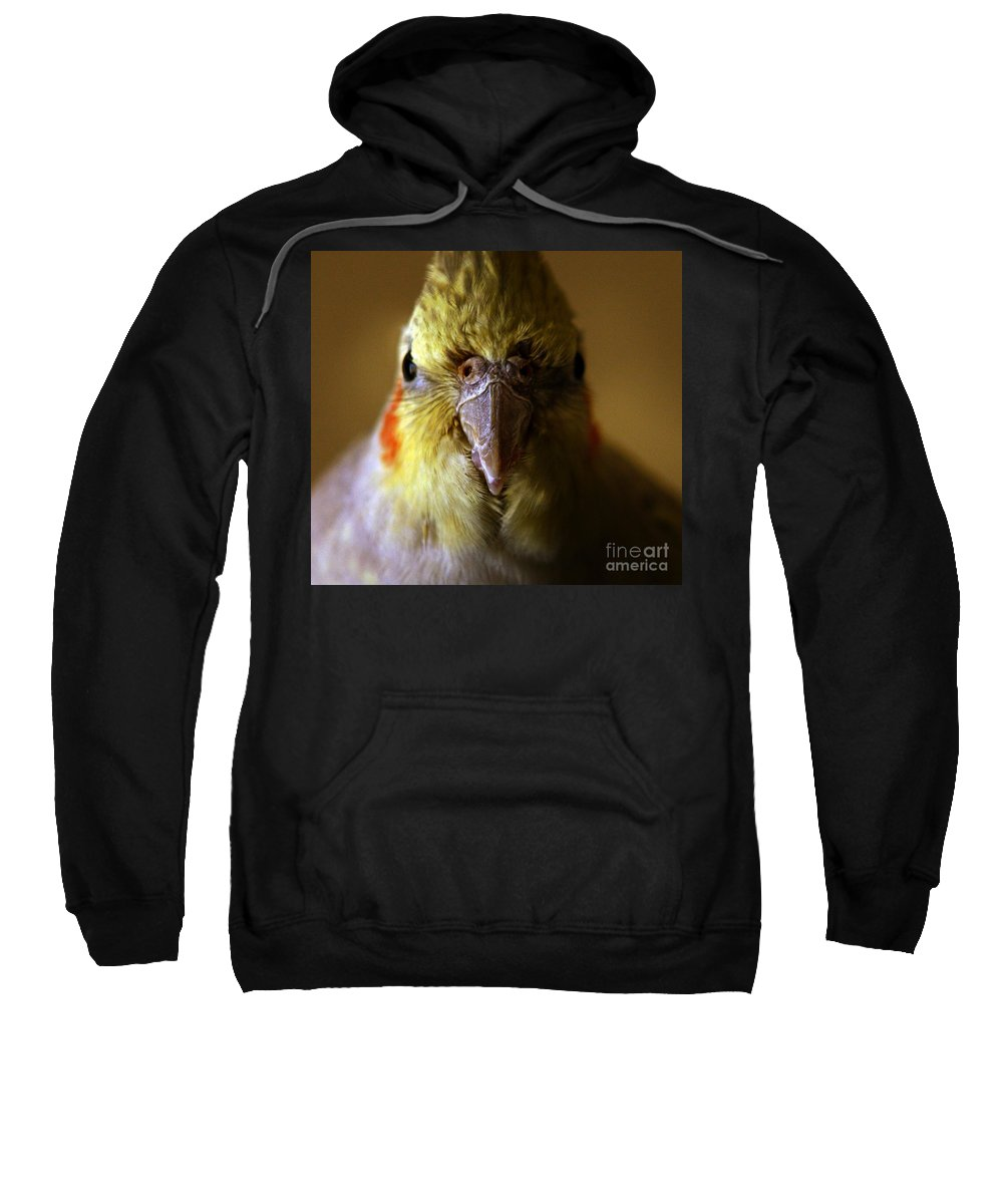 Cockatiel Sweatshirt featuring the photograph The Cockatiel by Angel Tarantella