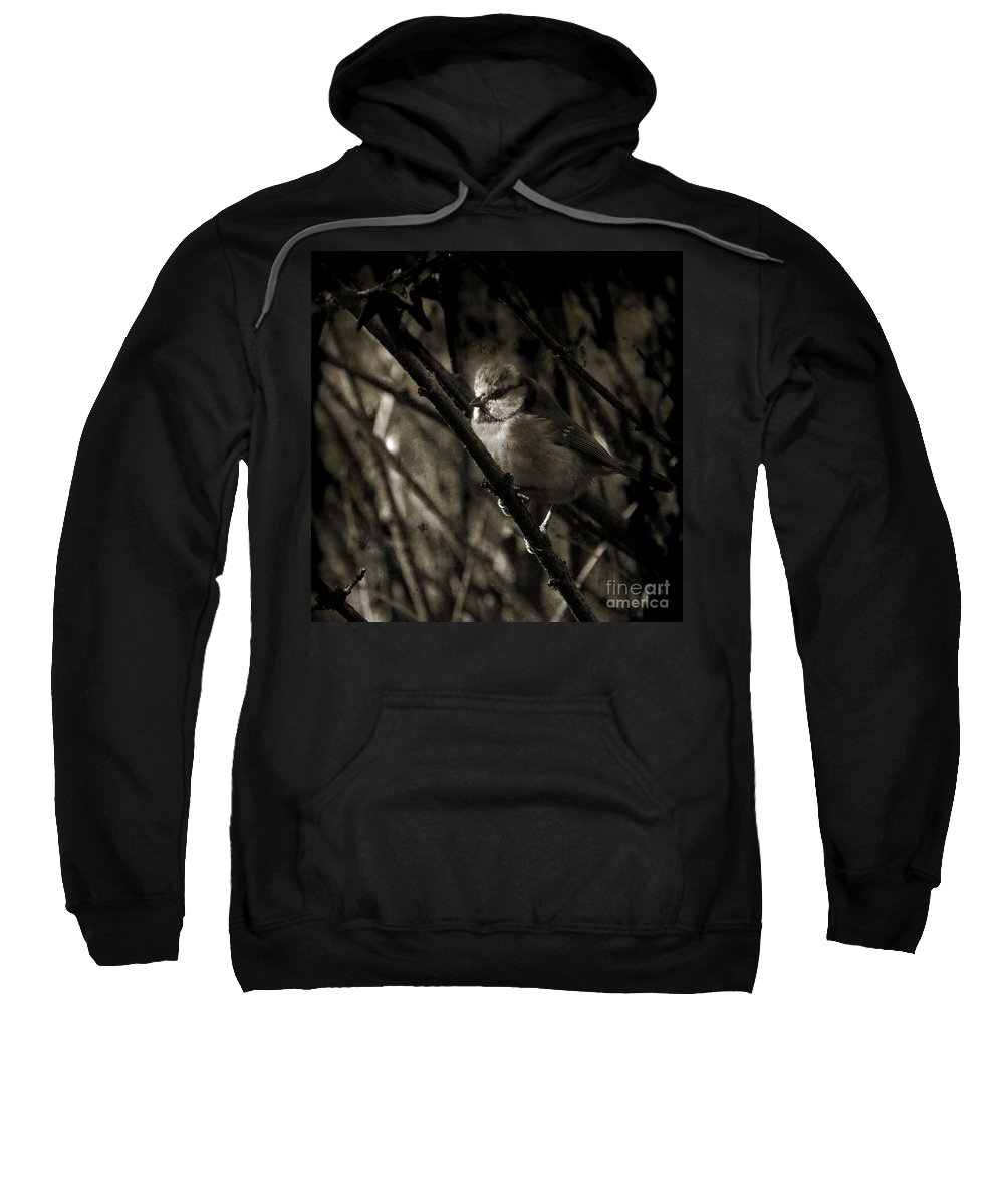 Blue Tit Sweatshirt featuring the photograph The Cold Morning by Angel Ciesniarska