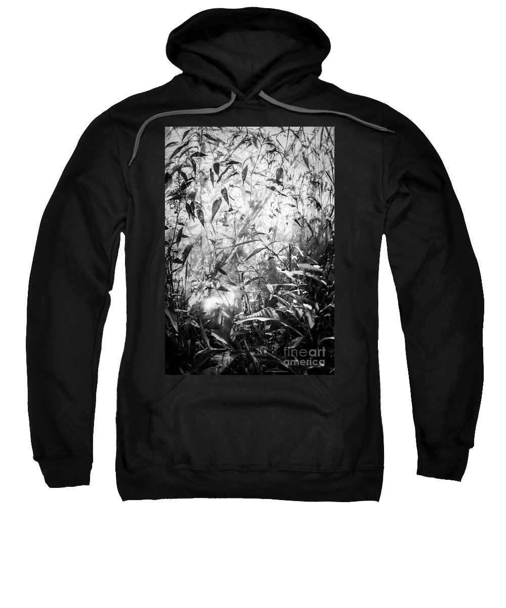 Leaves Sweatshirt featuring the photograph The Enchanted Greenhouse by Adam Isfendiyar