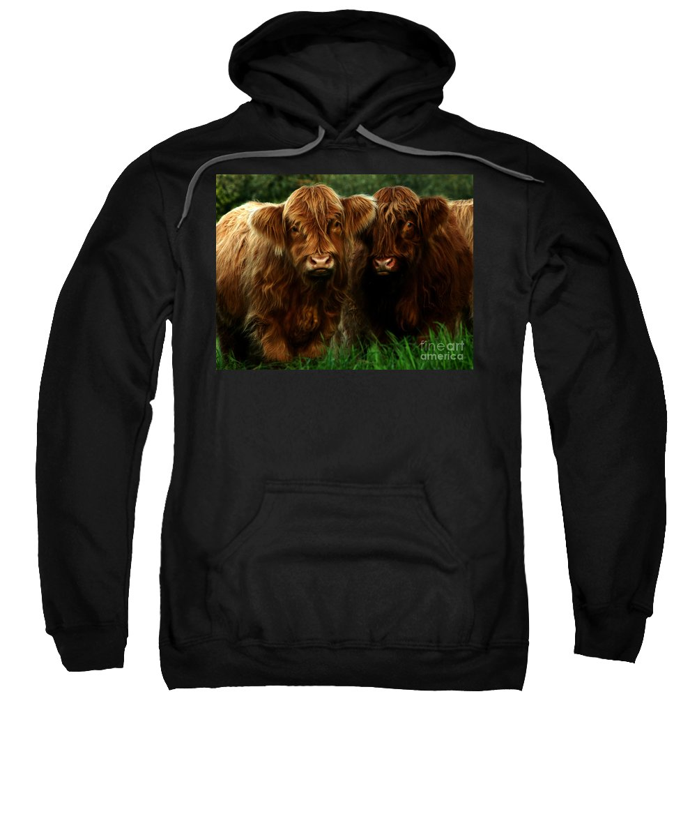 Heilan Coo Sweatshirt featuring the photograph The Fluffy Cows by Angel Ciesniarska