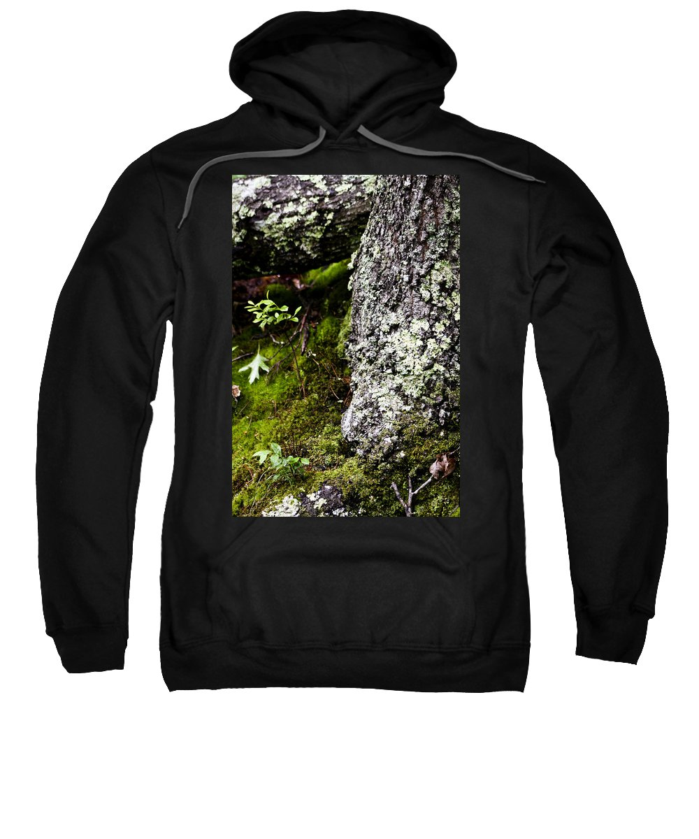 Moss Sweatshirt featuring the photograph The Forest Floor Bluestone State Park West Virginia by Teresa Mucha