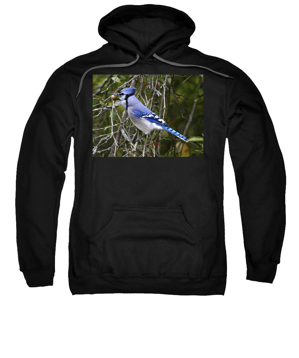 Bird Sweatshirt featuring the photograph The Gathering by Robert Pearson