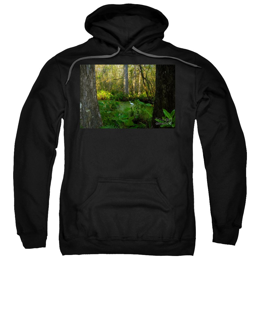 Corkscrew Swamp Sweatshirt featuring the photograph The Great Corkscrew Swamp by David Lee Thompson