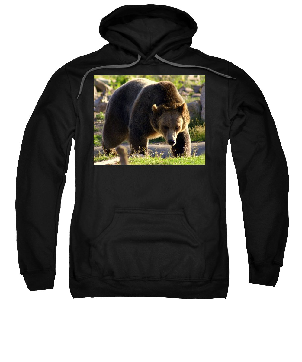 Grizzly Bear Sweatshirt featuring the photograph The Grizz by Marty Koch