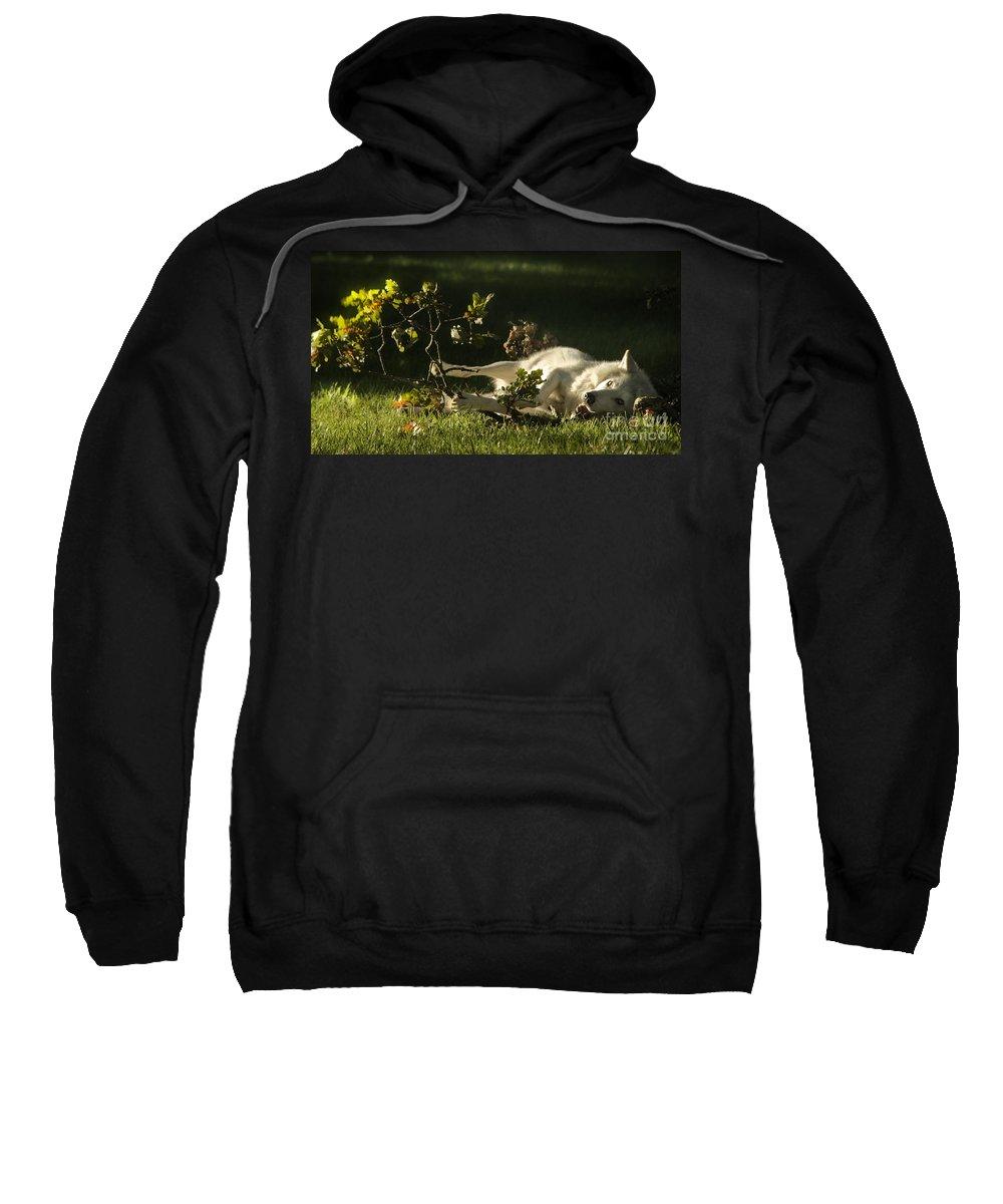 Wolf Sweatshirt featuring the photograph The Happy Wolf by Angel Ciesniarska