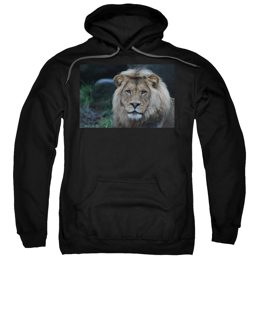 Lion Sweatshirt featuring the photograph The King by Laddie Halupa