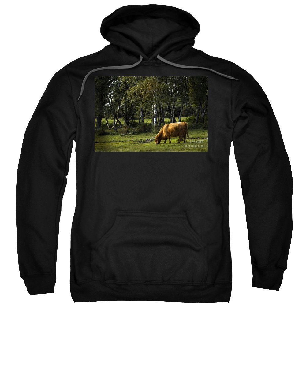 Heilan Coo Sweatshirt featuring the photograph the New forest creatures by Angel Tarantella