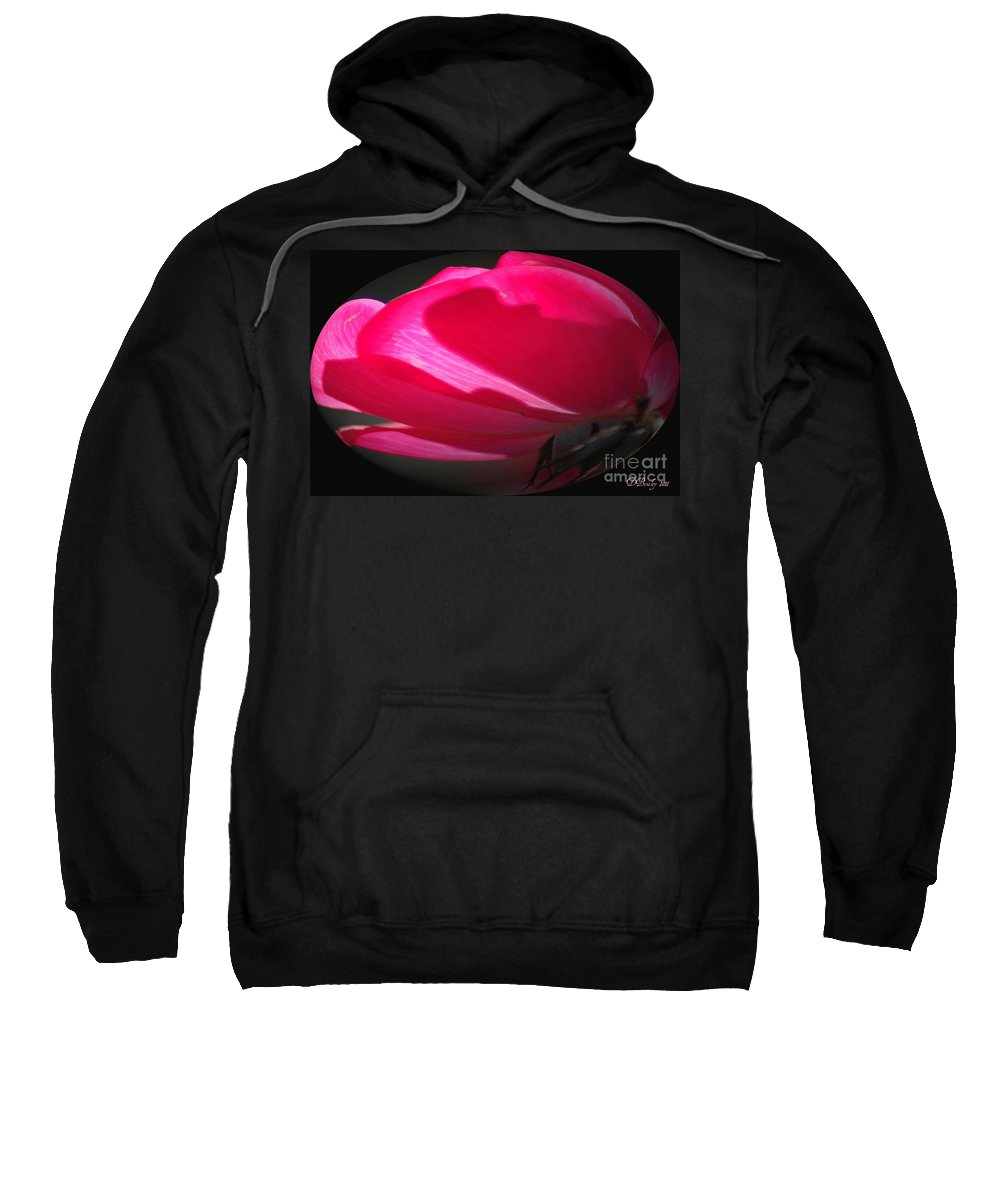 Rose Sweatshirt featuring the photograph The Oval Rose by Donna Bentley