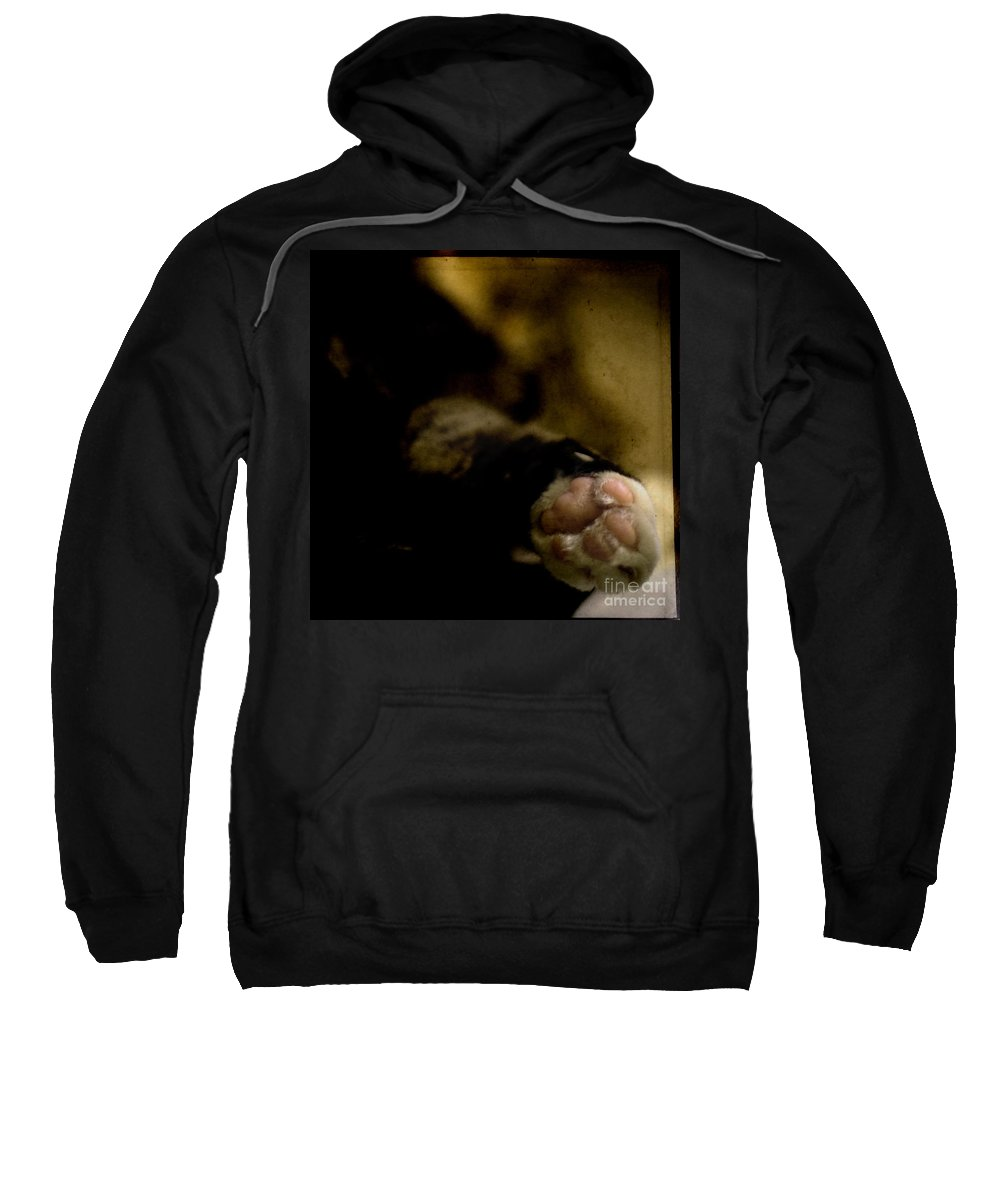 Cat Sweatshirt featuring the photograph The Paw by Angel Ciesniarska