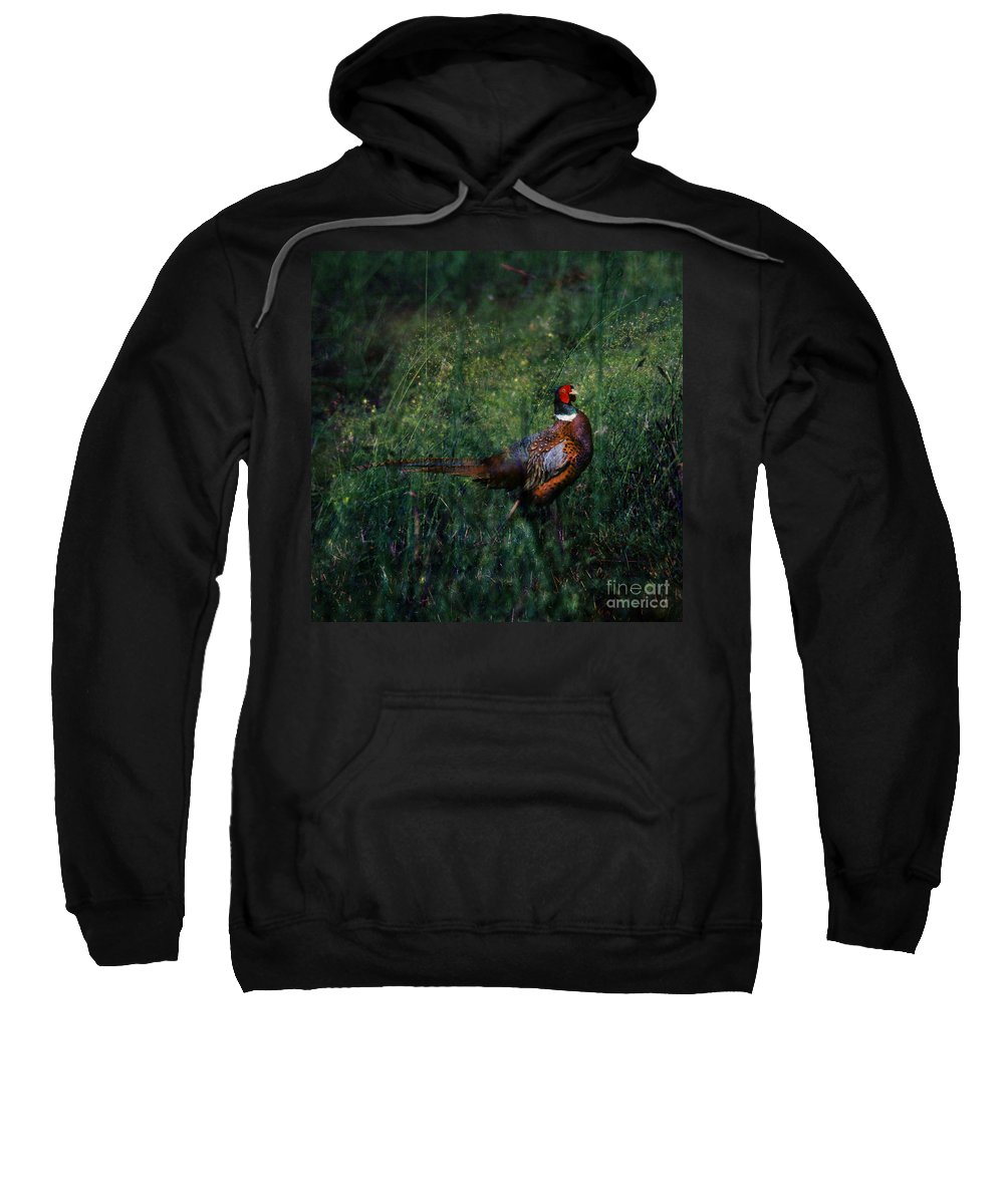 Pheasant Sweatshirt featuring the photograph The Pheasant In The Autumn Colors by Angel Ciesniarska