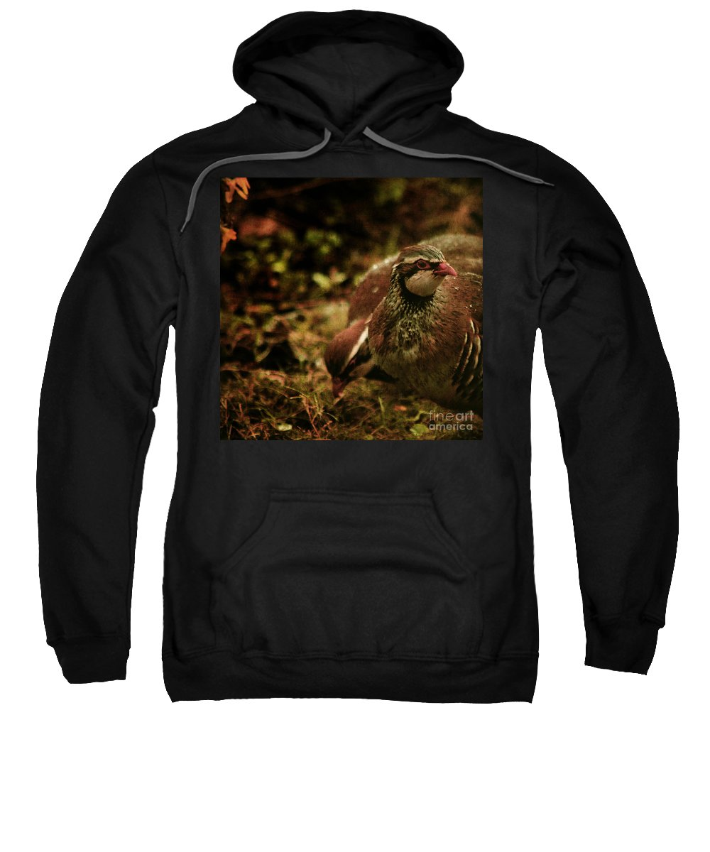Partridge Sweatshirt featuring the photograph The Redlegged Partridges by Angel Ciesniarska