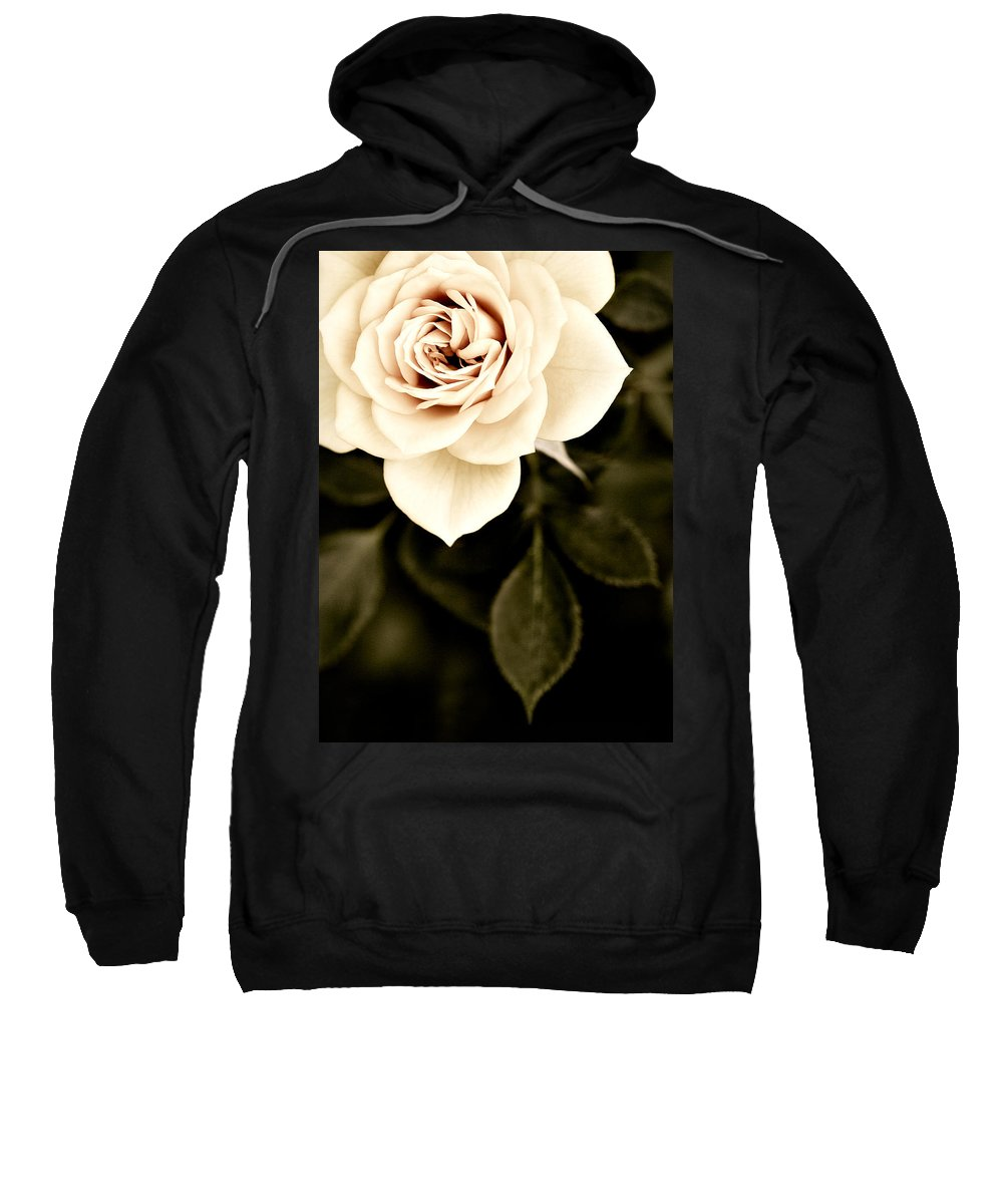 Rose Sweatshirt featuring the photograph The Softest Rose by Marilyn Hunt