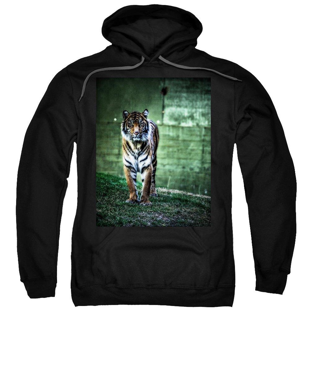 Sumatran Tiger Sweatshirt featuring the photograph The Tigress by Saija Lehtonen