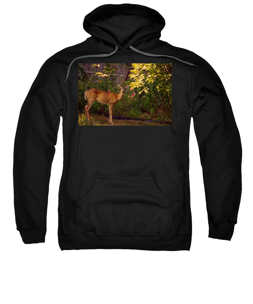 Deer Sweatshirt featuring the photograph The Visit by Mike Smale