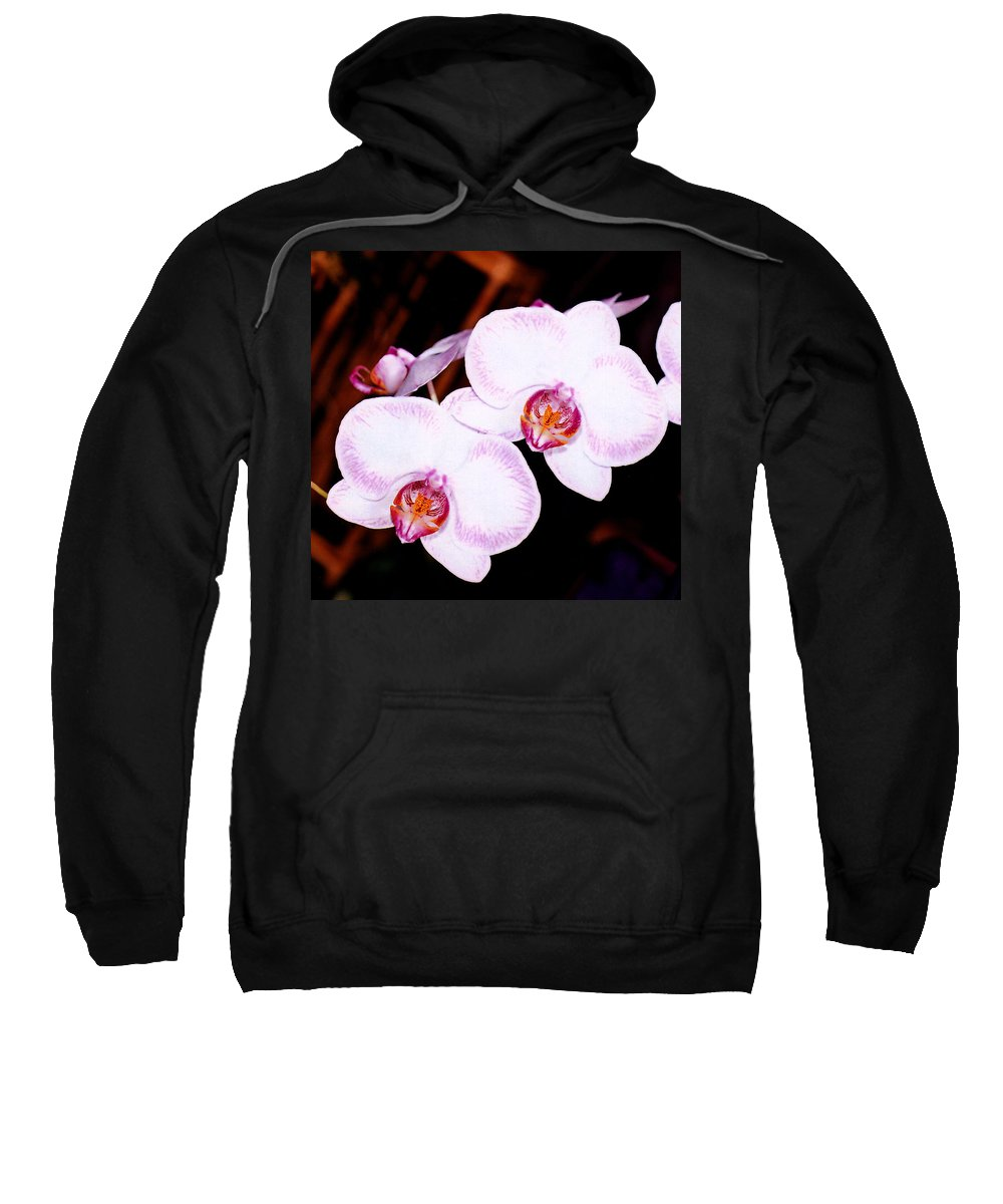 Nature Sweatshirt featuring the photograph The White Twins by Susanne Van Hulst