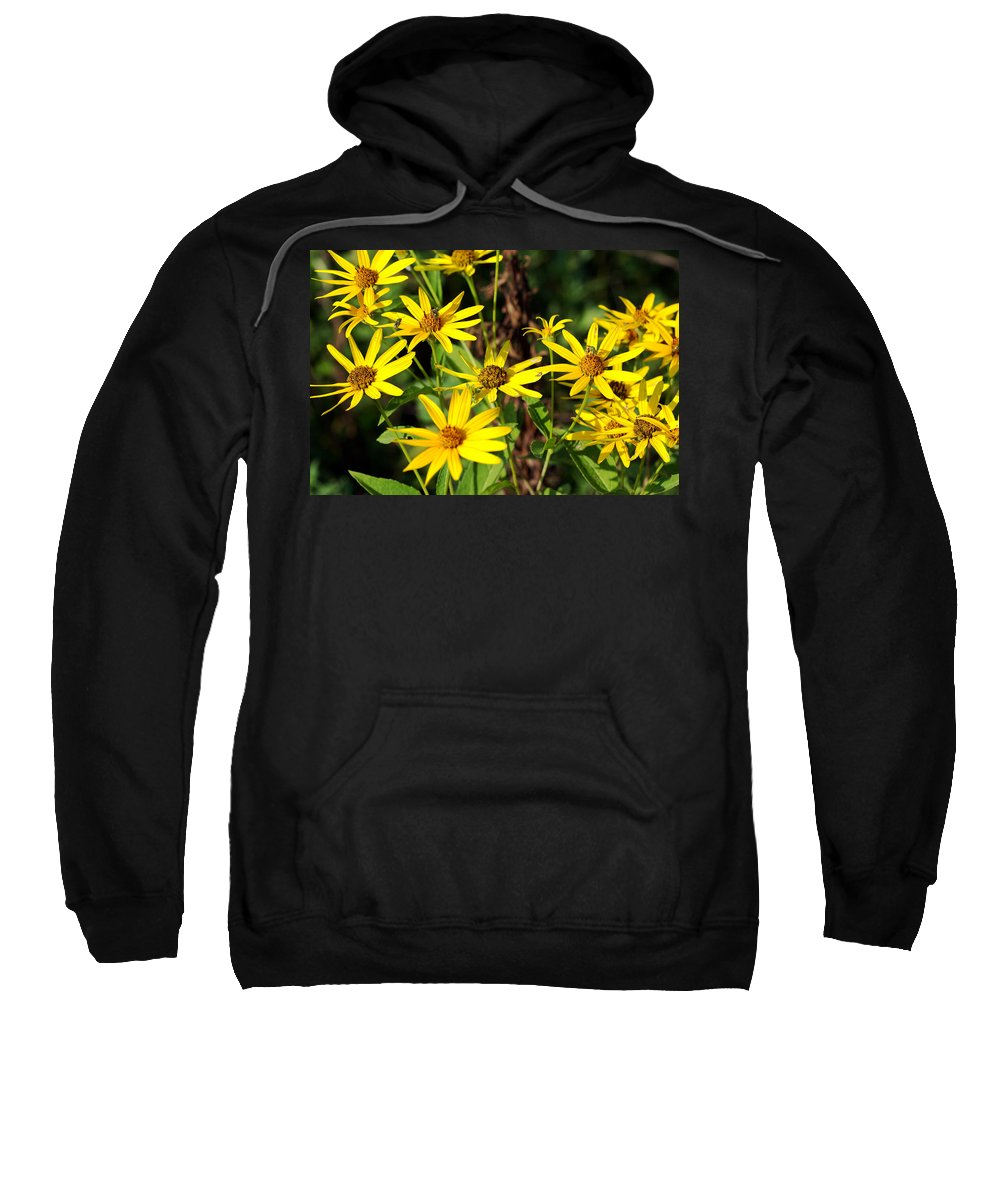 Beautiful Sweatshirt featuring the photograph Thin-leaved Sunflower by Jack R Perry