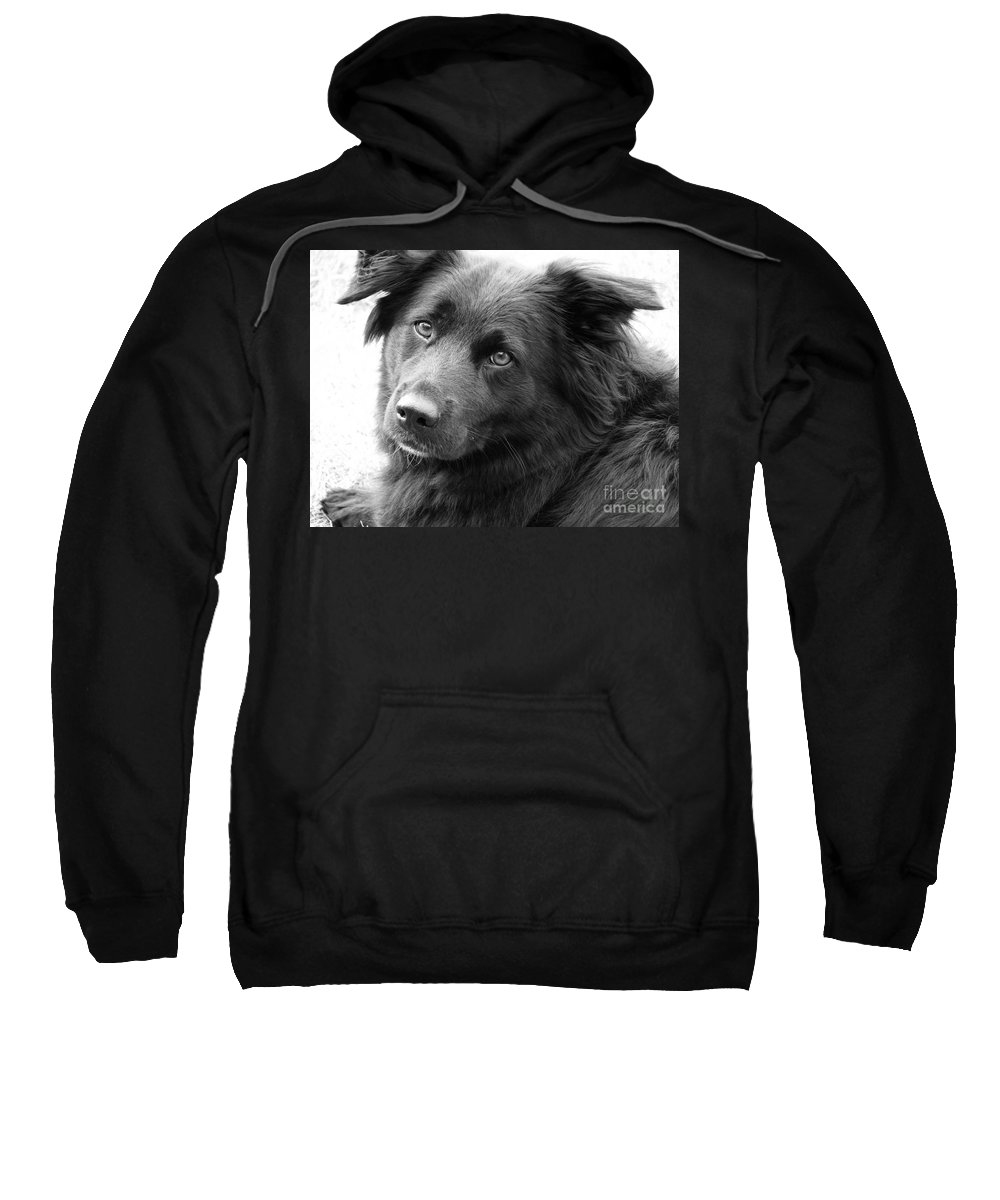 Dog Sweatshirt featuring the photograph Thinking by Amanda Barcon
