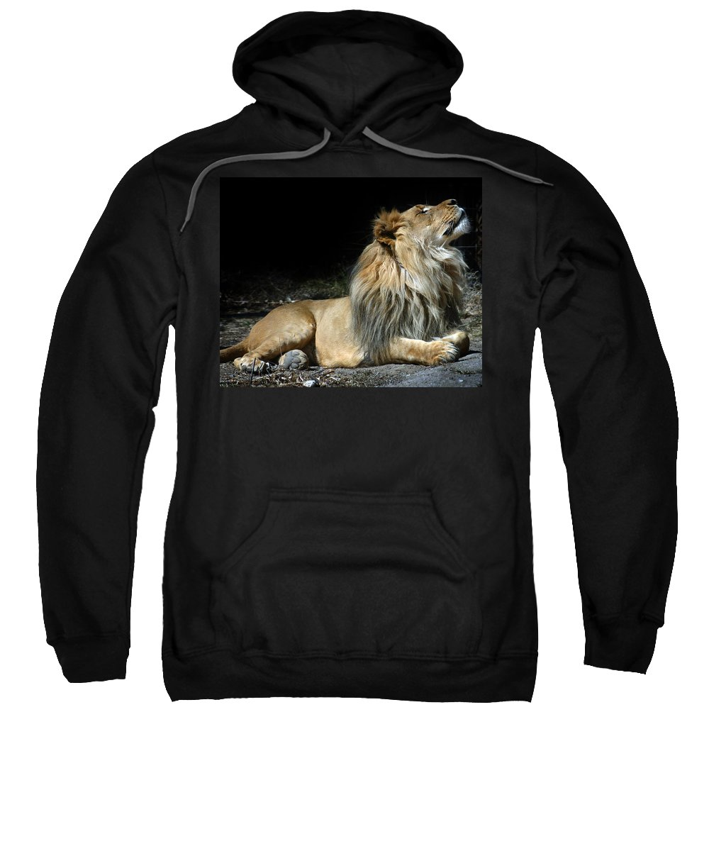 Lion Sweatshirt featuring the photograph This Is My Best Side by Anthony Jones