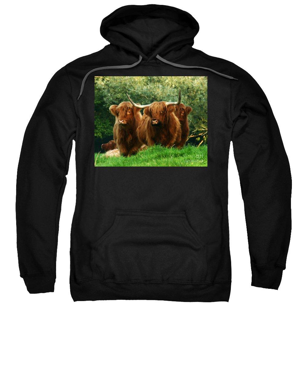 Cow Sweatshirt featuring the photograph Three Amigos by Angel Ciesniarska