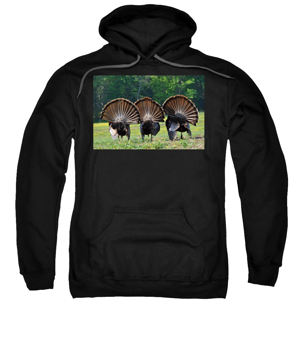 Turkey Sweatshirt featuring the photograph Three Fans by Todd Hostetter