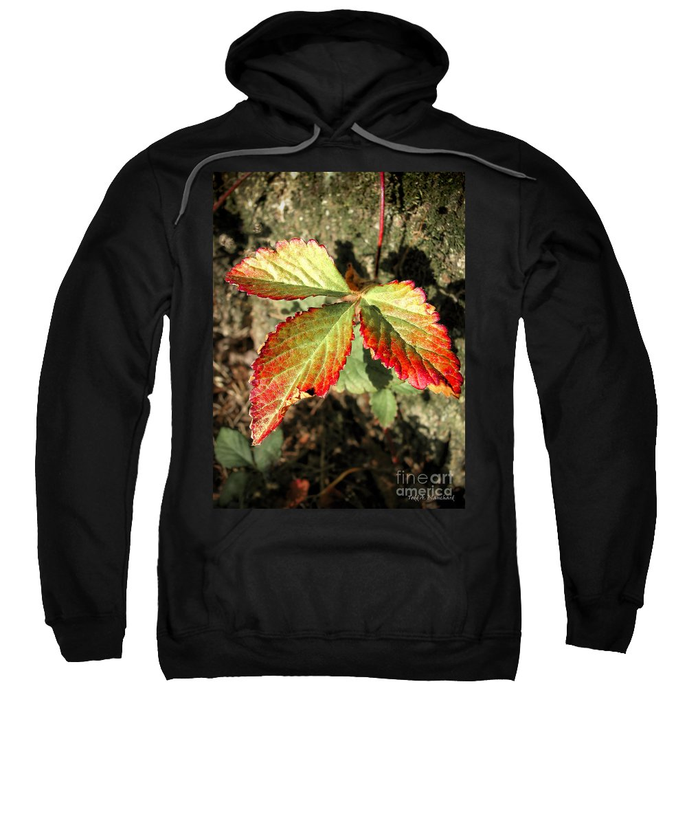 Forest Sweatshirt featuring the photograph Three Leaves by Todd Blanchard