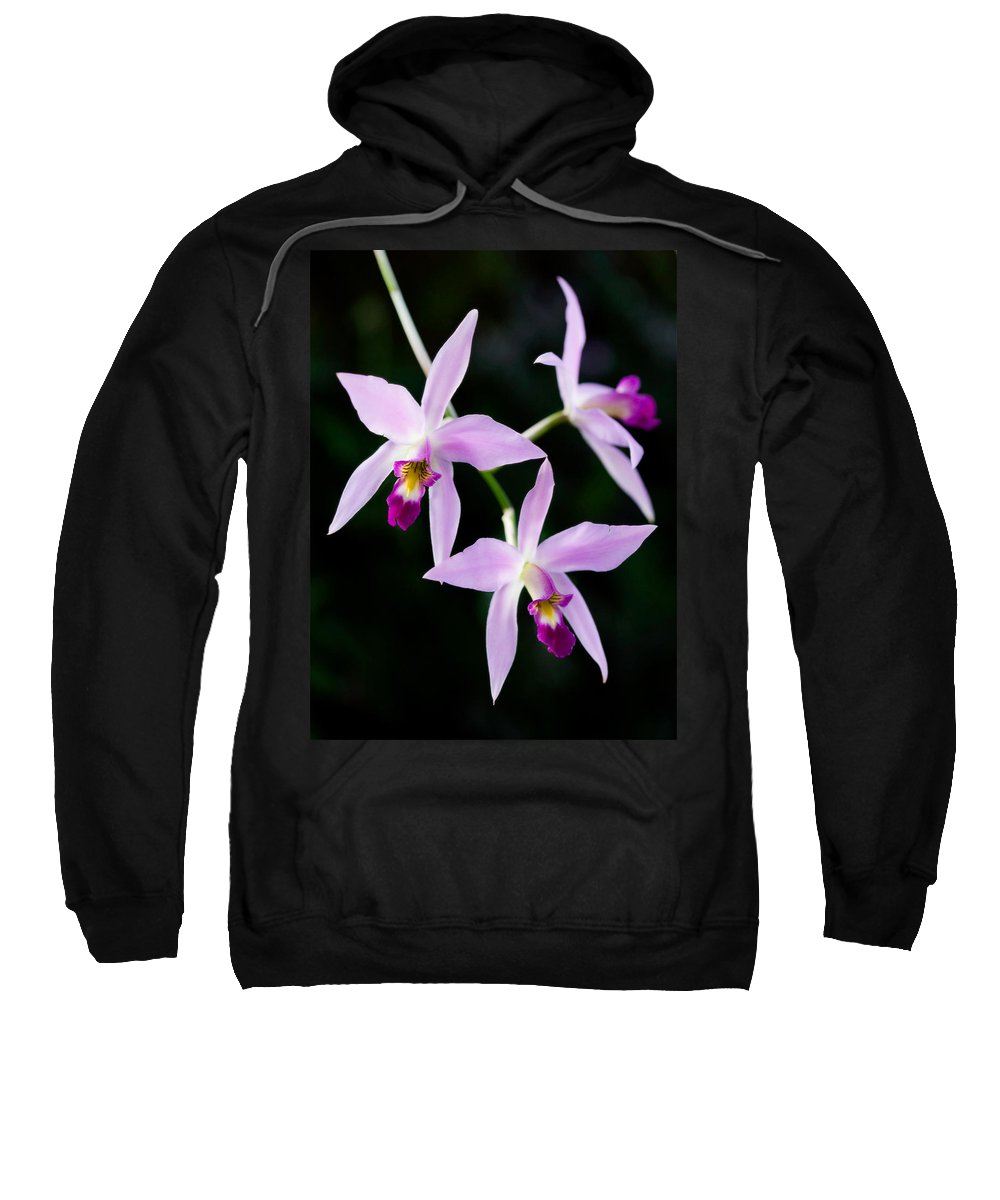 Orchid Sweatshirt featuring the photograph Three Orchids by Marilyn Hunt