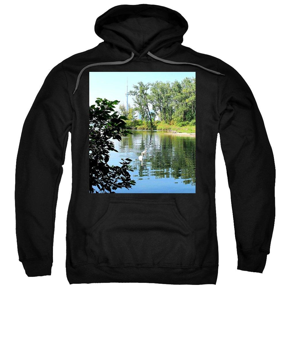 Swans Sweatshirt featuring the photograph Three Toronto Swans by Ian MacDonald
