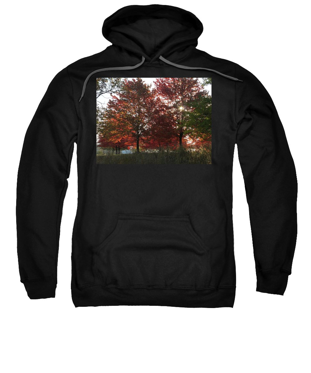 Fall Sweatshirt featuring the photograph Through The Leaves by Lauri Novak