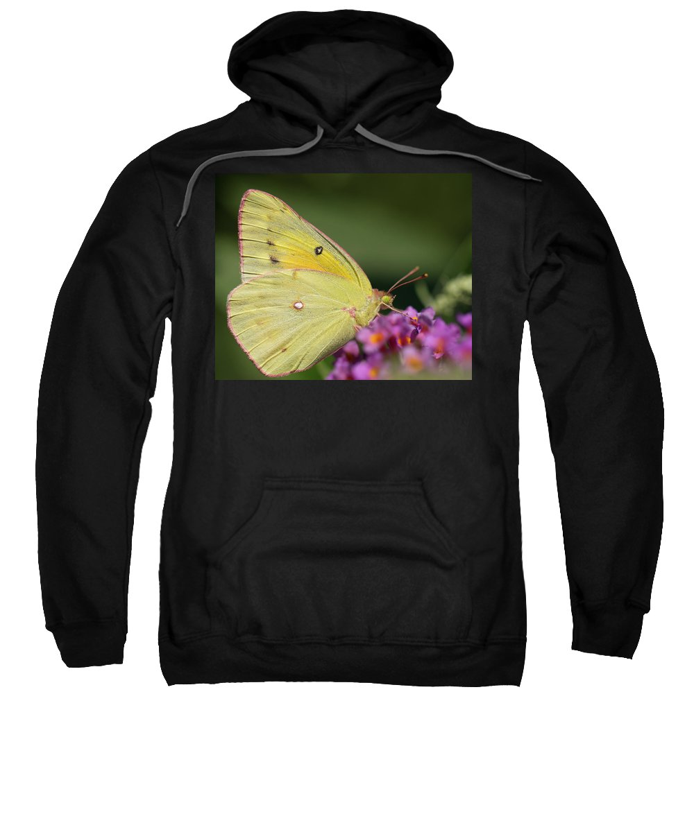 Butterfly Sweatshirt featuring the photograph Tickled Pink by Shelley Neff