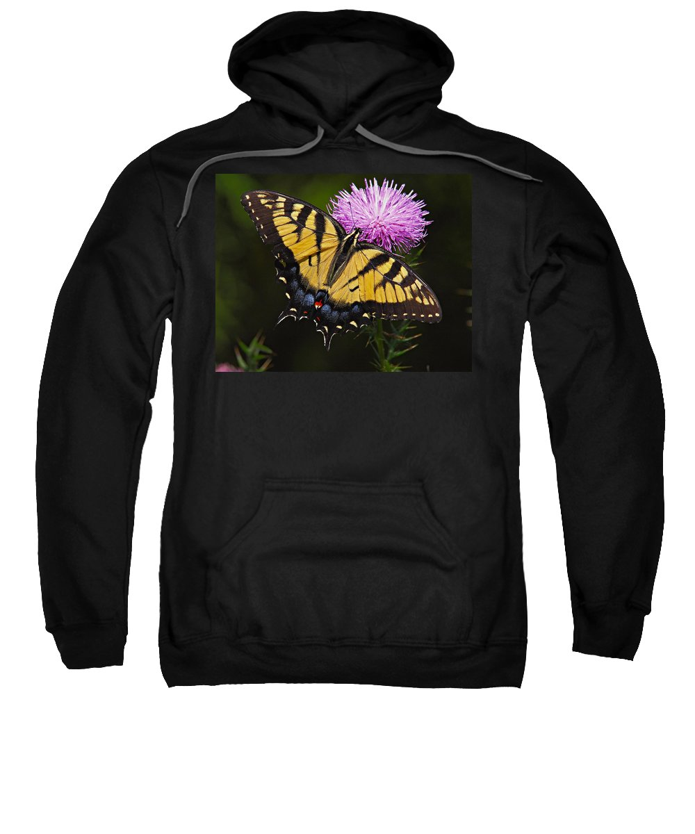 Butterfly Sweatshirt featuring the photograph Tiger Swallowtail by William Jobes