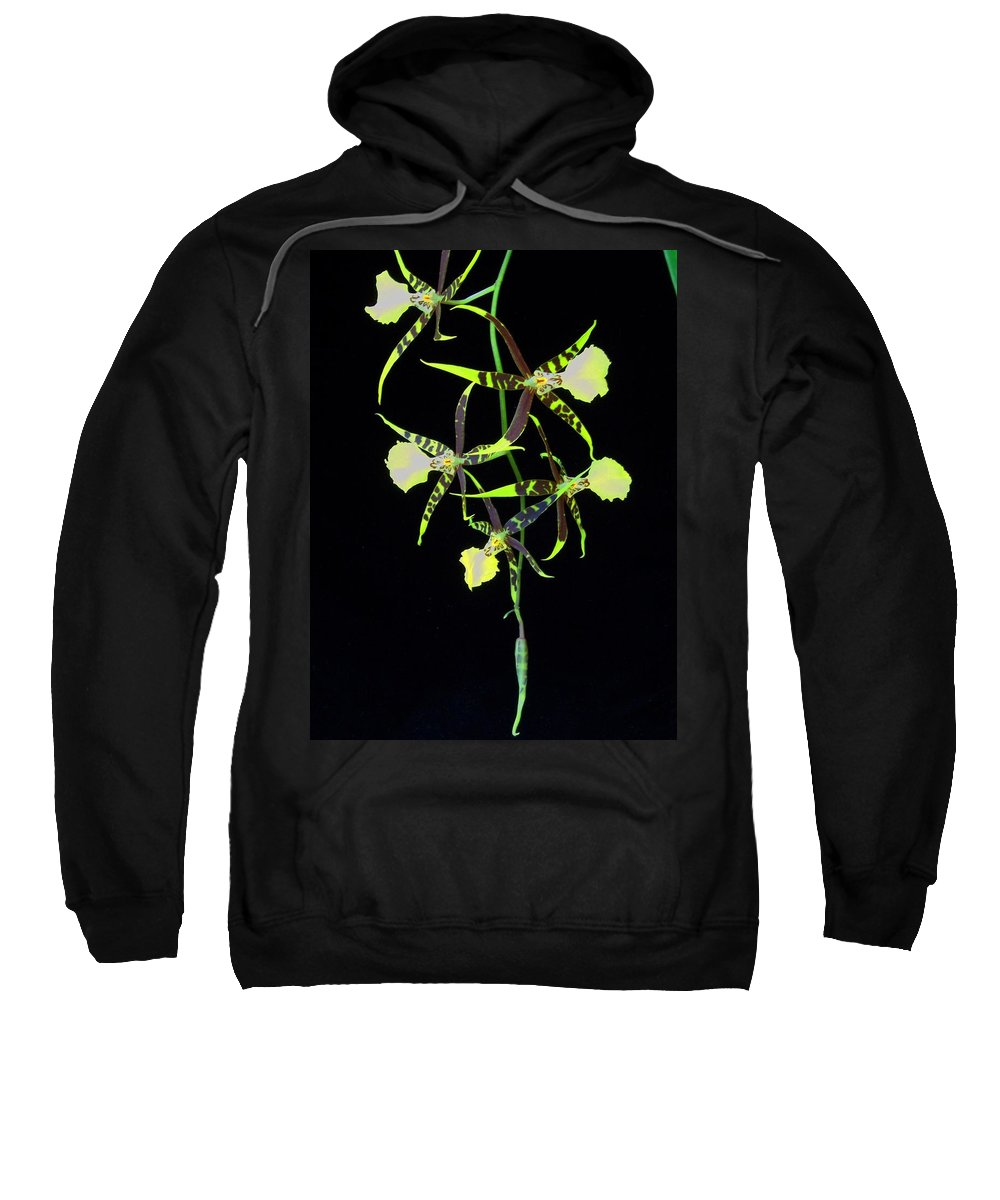 Orchid Sweatshirt featuring the photograph Tigers by Laurie Paci