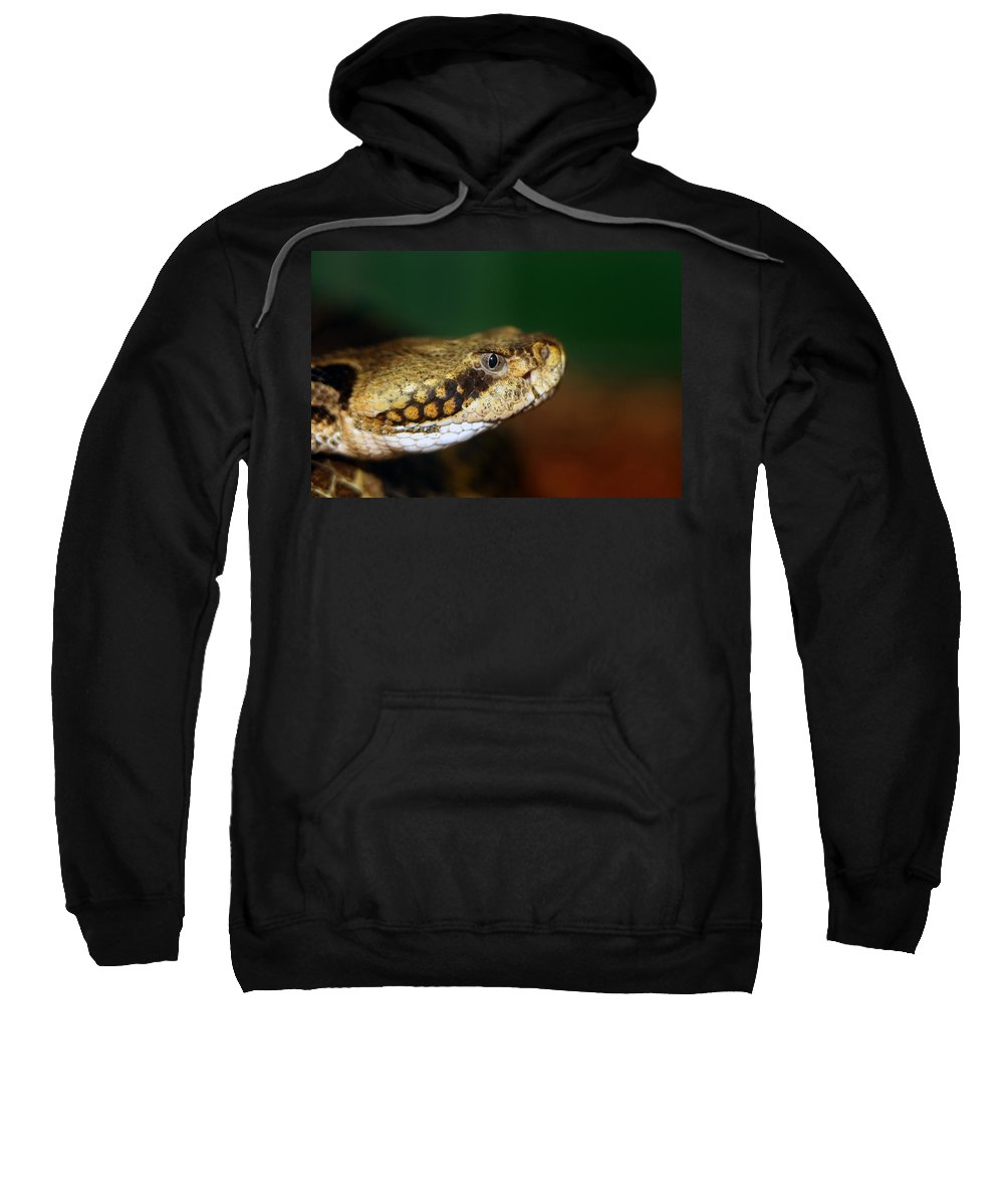 Animal Sweatshirt featuring the photograph Timber Rattler Head On by Alan Look